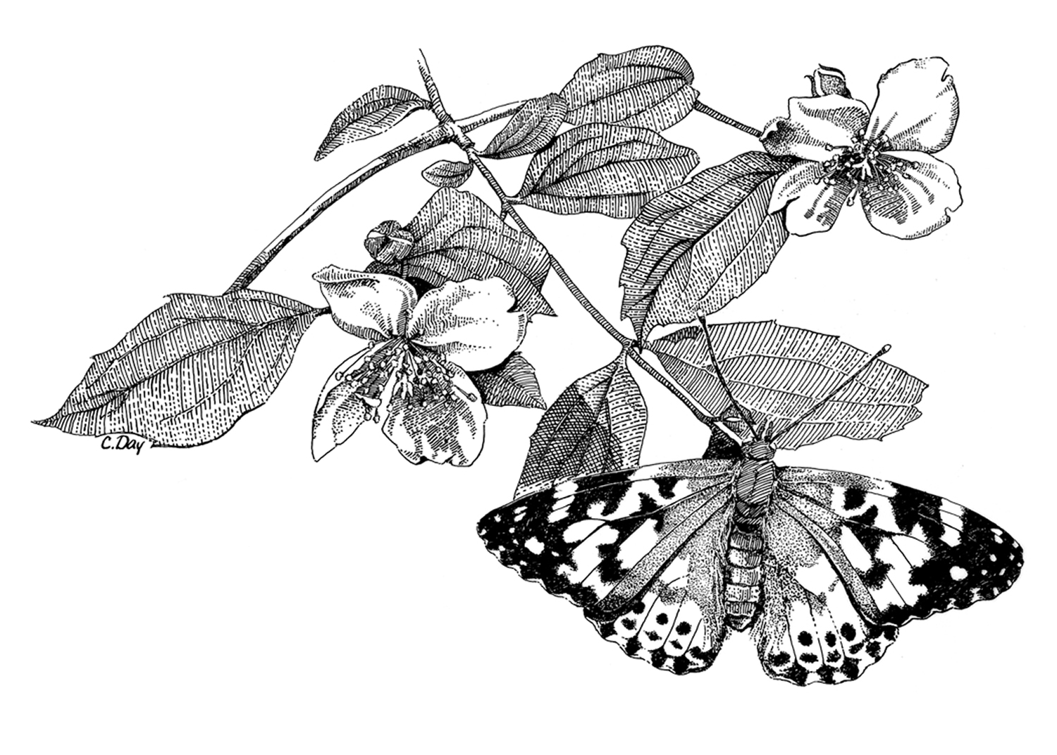Butterfly and Blossoms