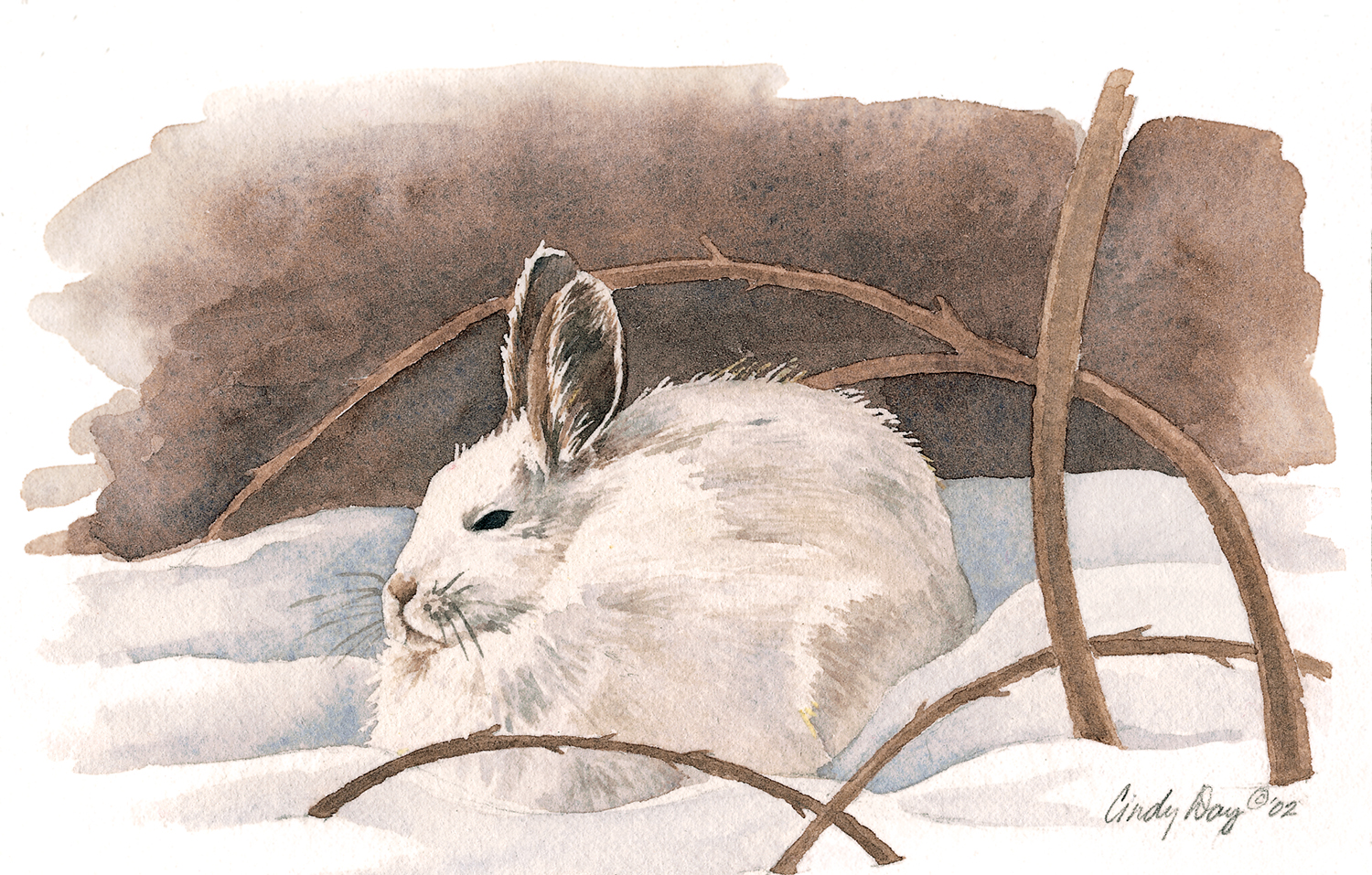 Snow Bunny in Briars