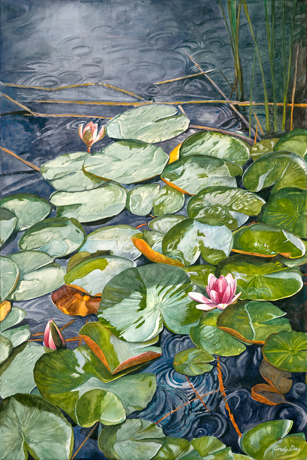 Water Lilies in the Rain