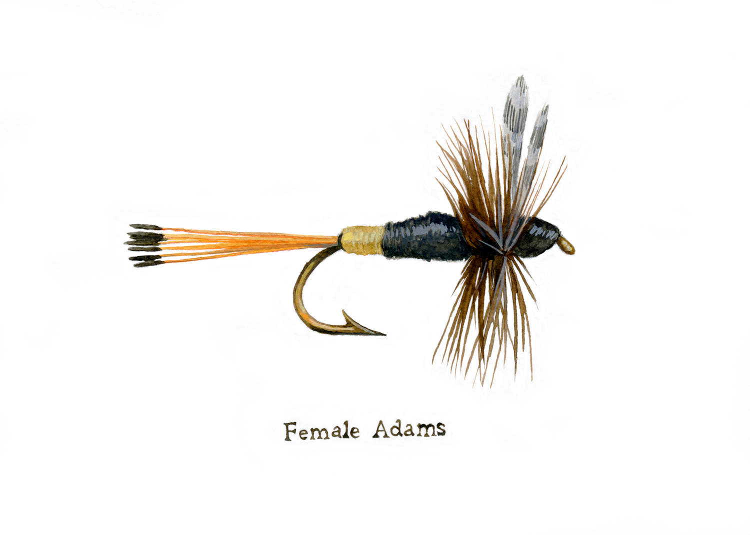 Female Adams