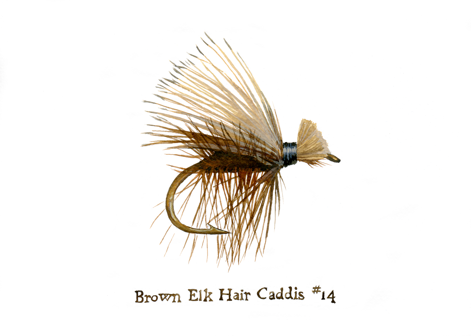 Brown Elk Hair Caddis #14