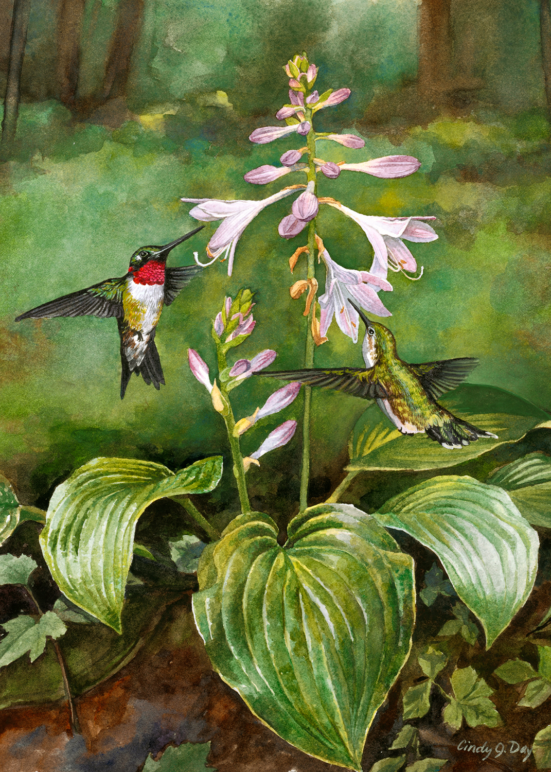 Forest Hummers