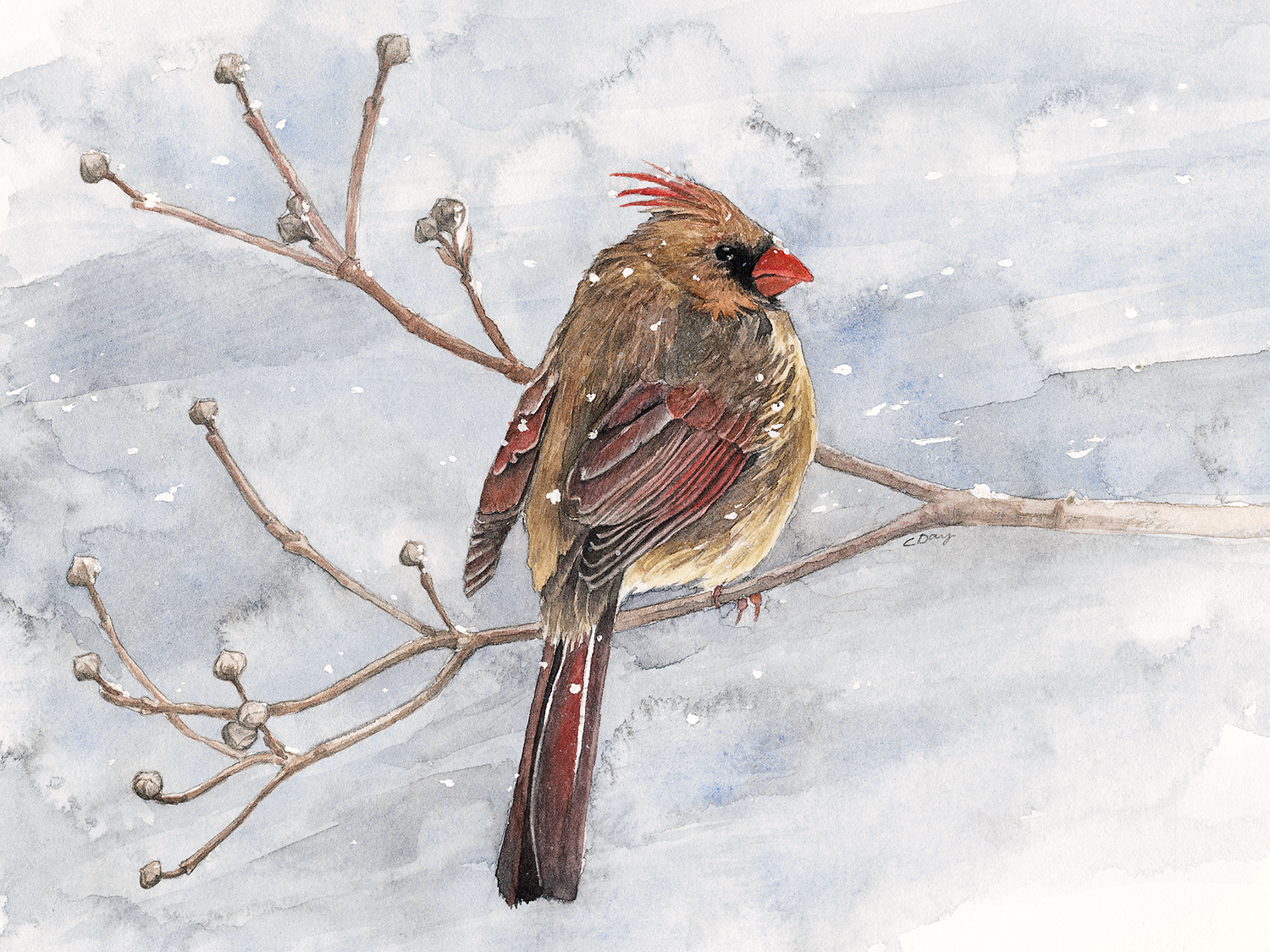 Cardinal on a Winters' Day