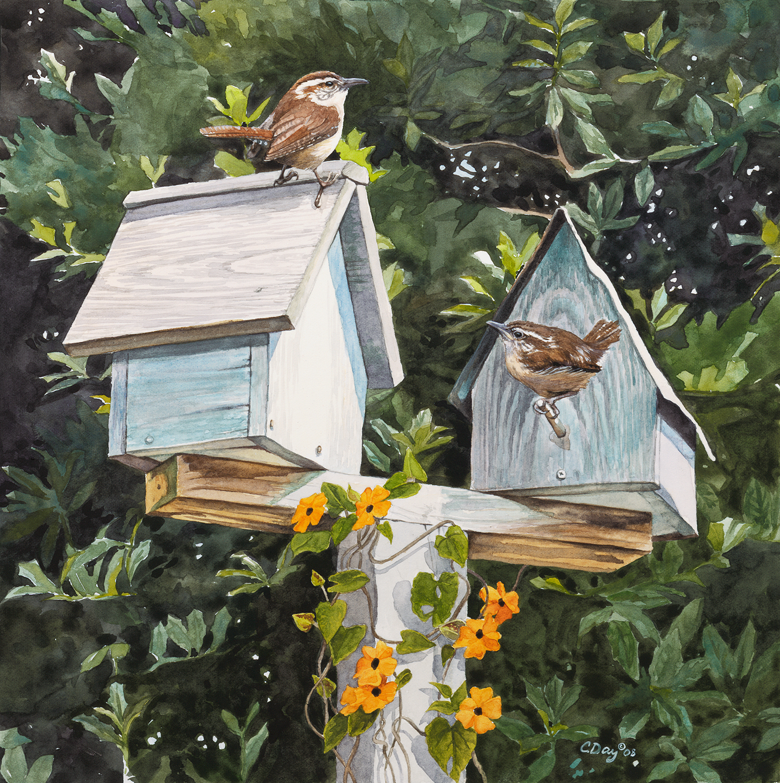 Carolina Wrens at Home
