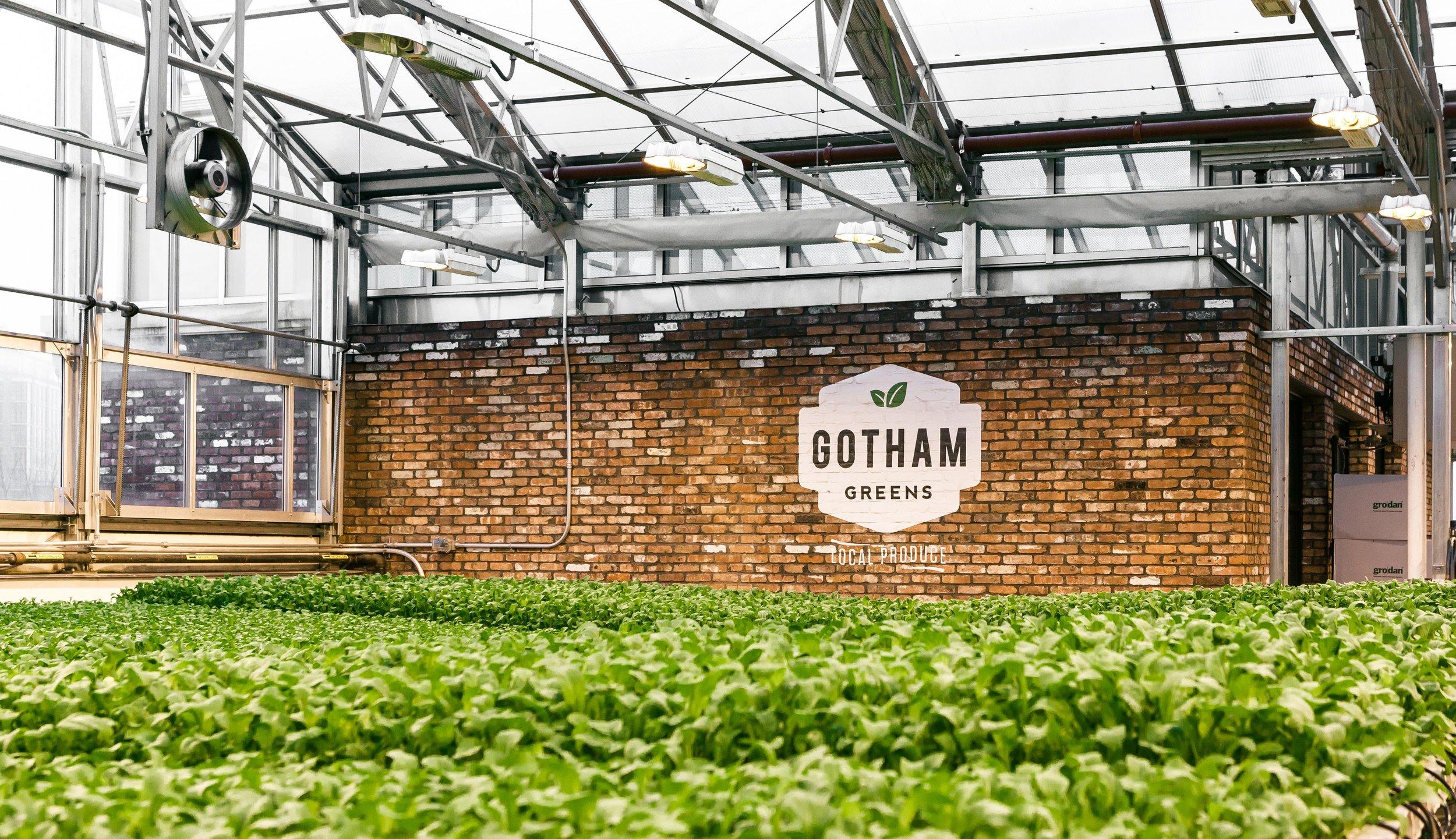 gotham-greens-rooftop-farm