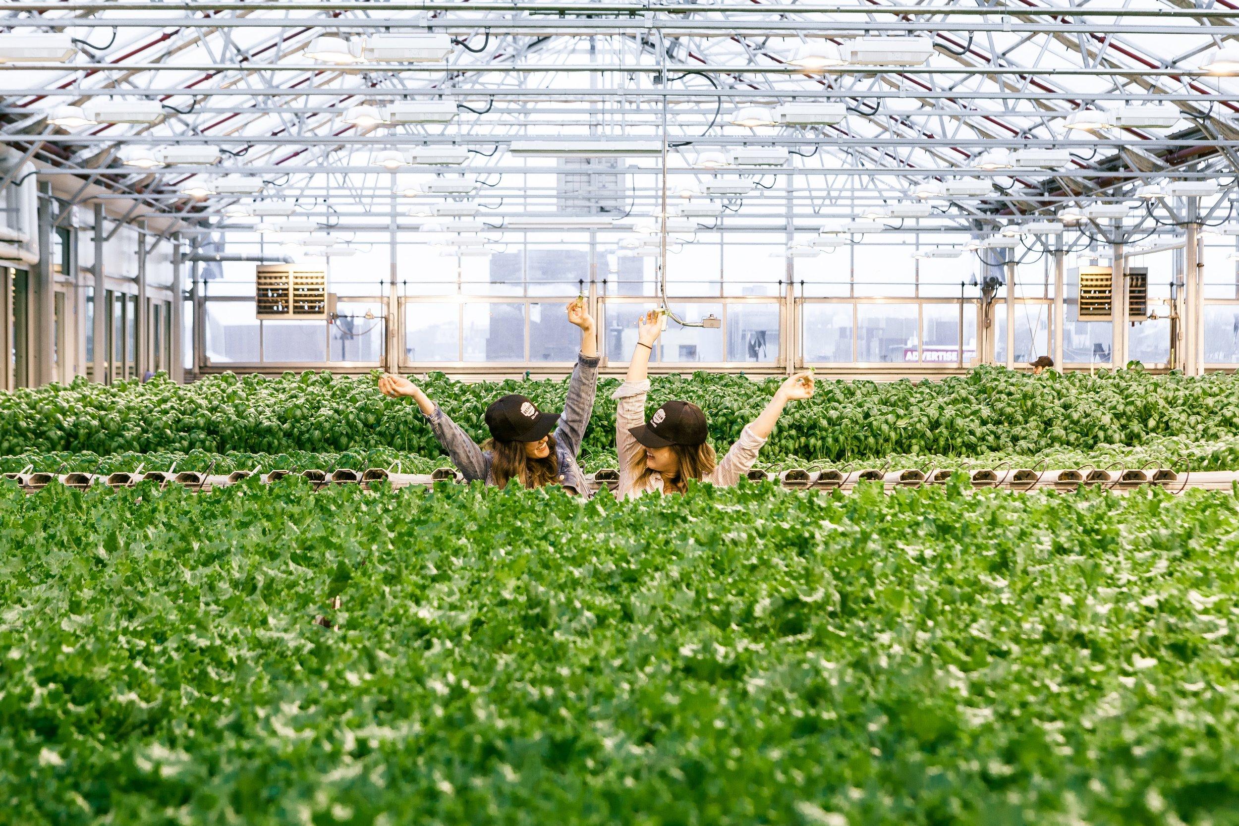 gotham-green-rooftop-farm