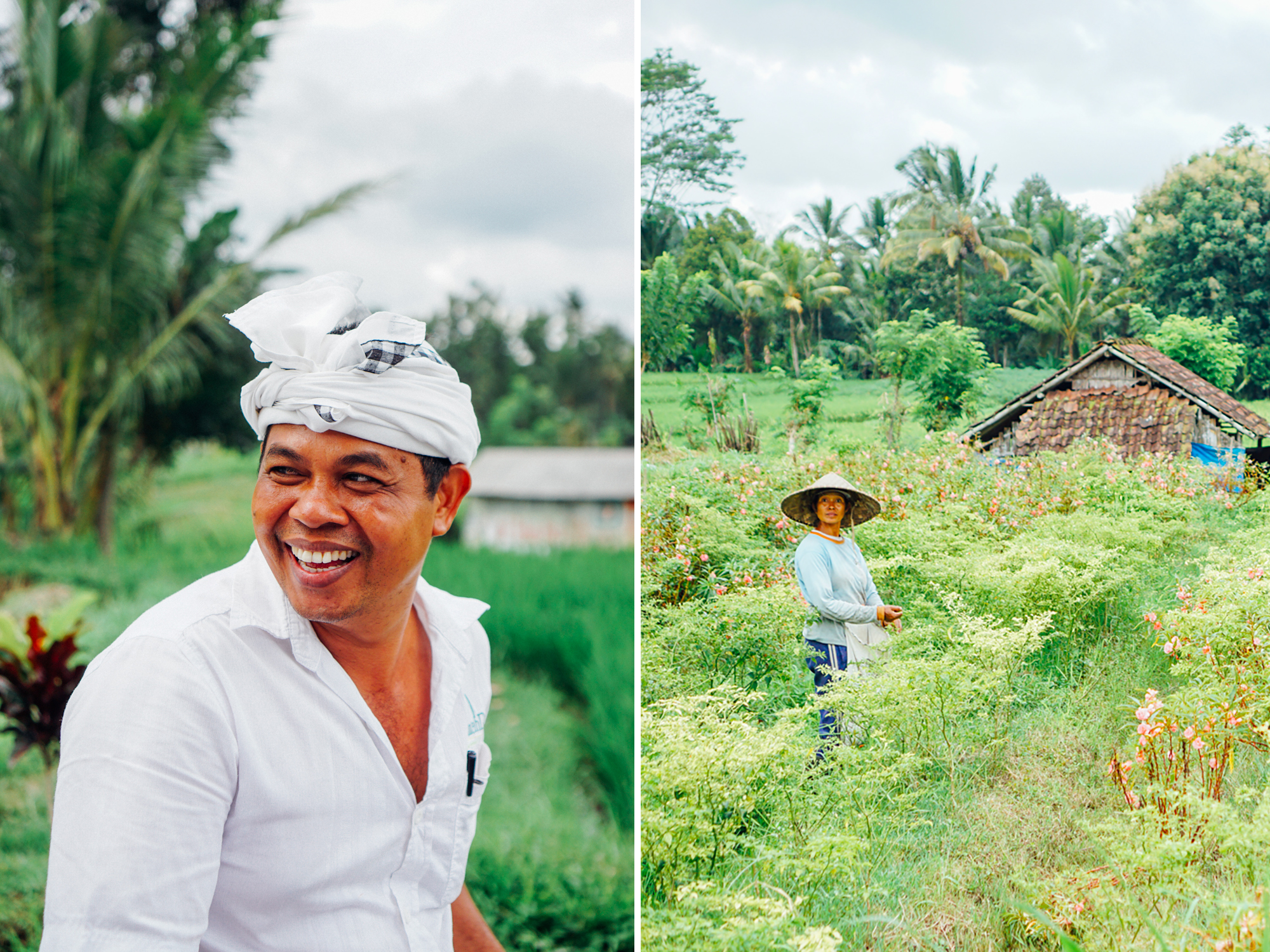 bali travel guide: ubud, rice terrace