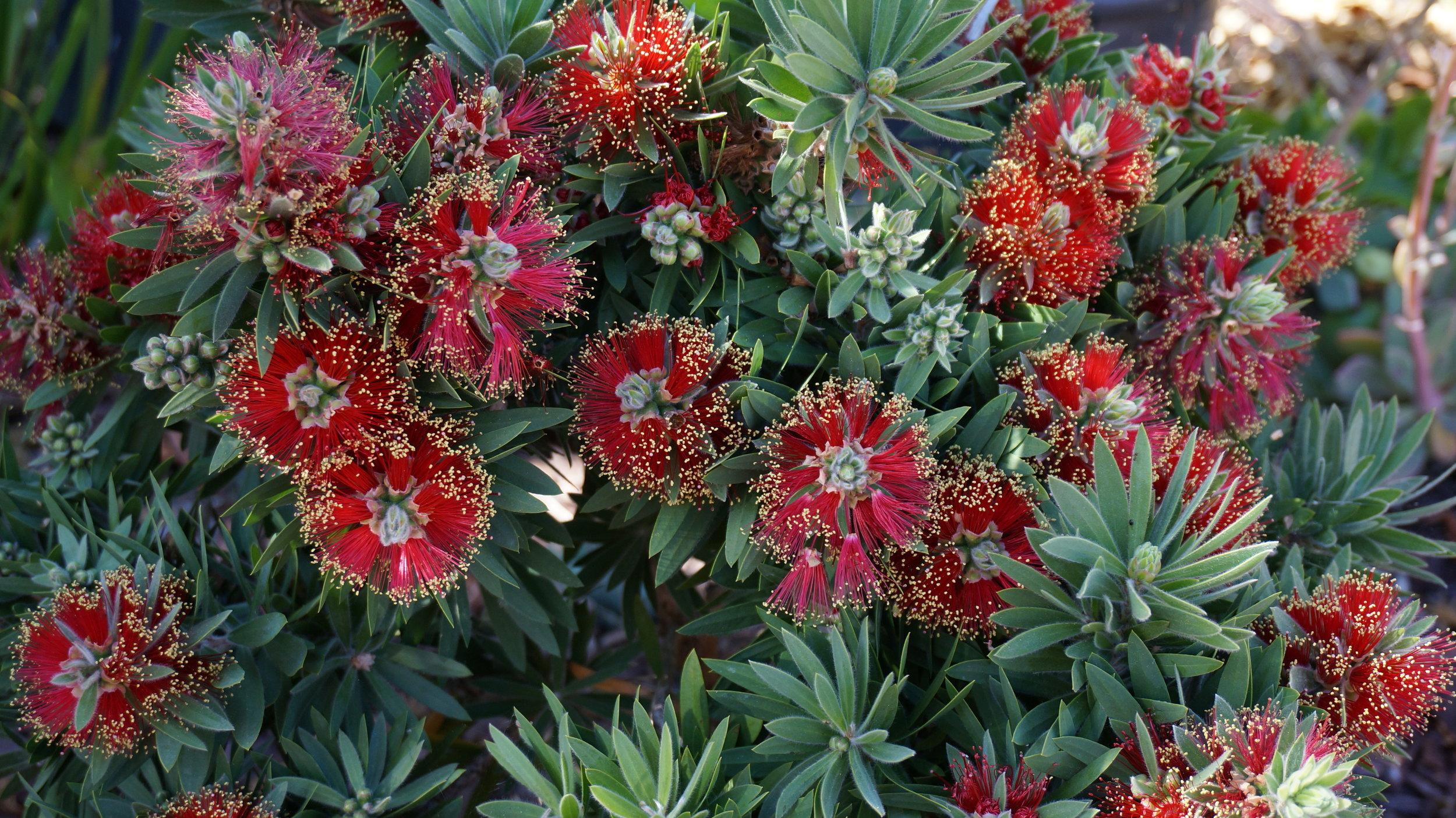 redflowergroup.jpg