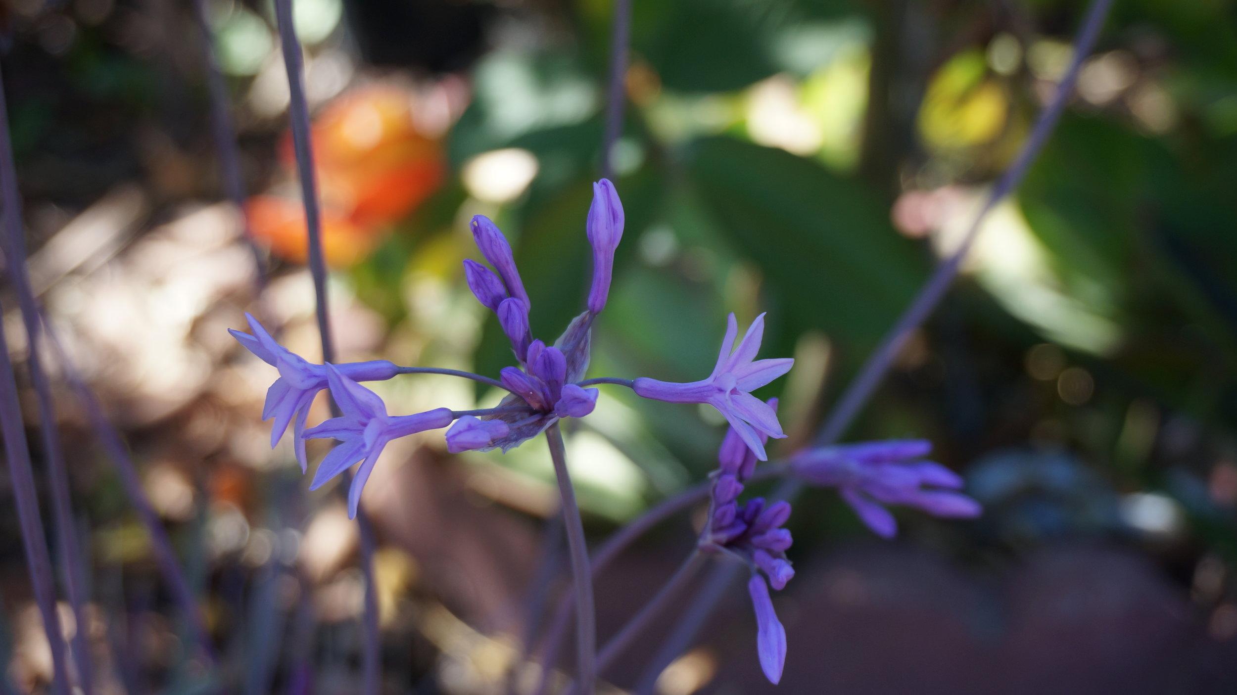 purplelittleflower.jpg