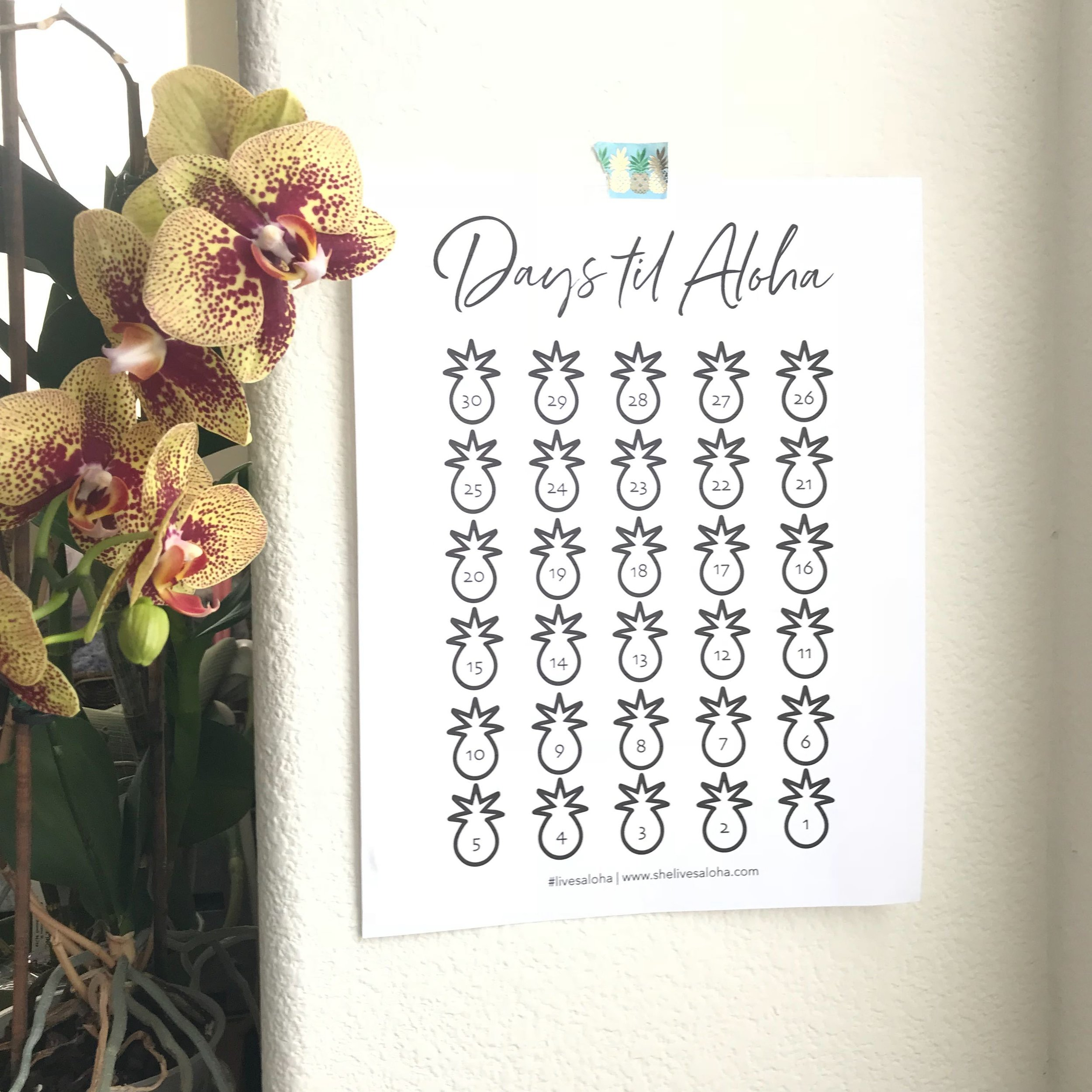 Countdown to Aloha - Sign up and get your free printable vacation countdown calendar.