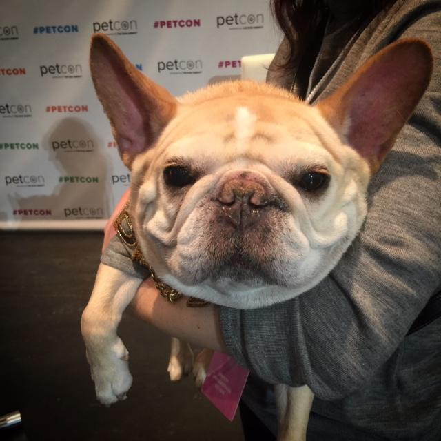 @thedailywalter - aka Walter CronkiteBrooklyn-based dog-at-large