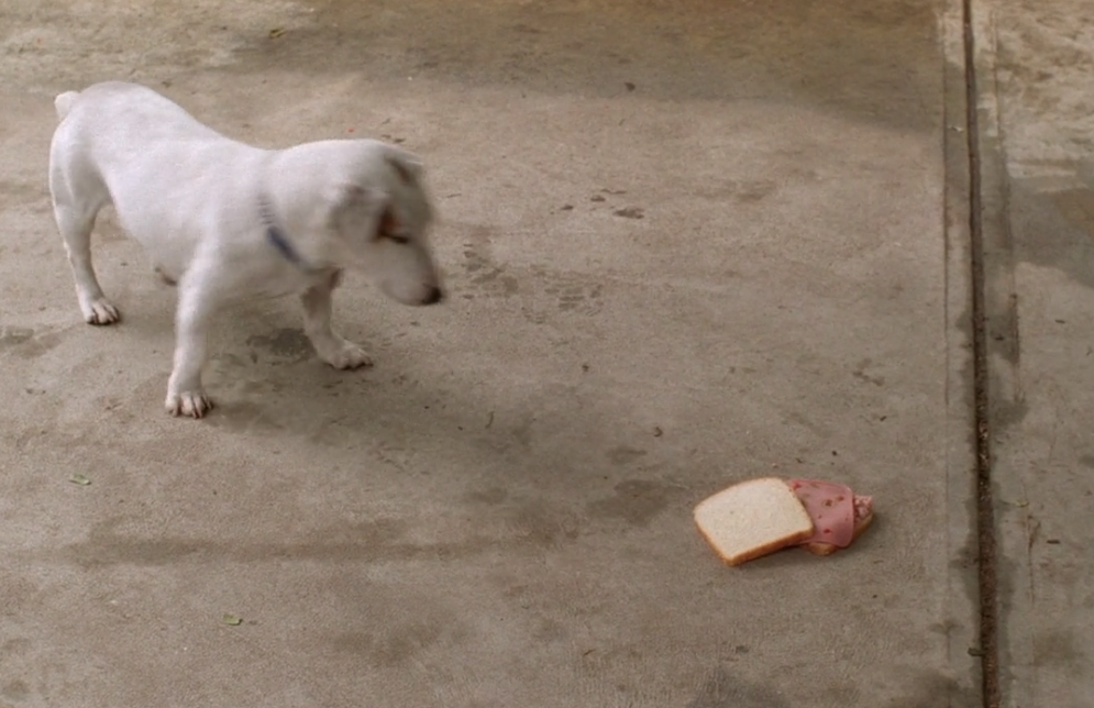 S02E21-food-sandwich.png