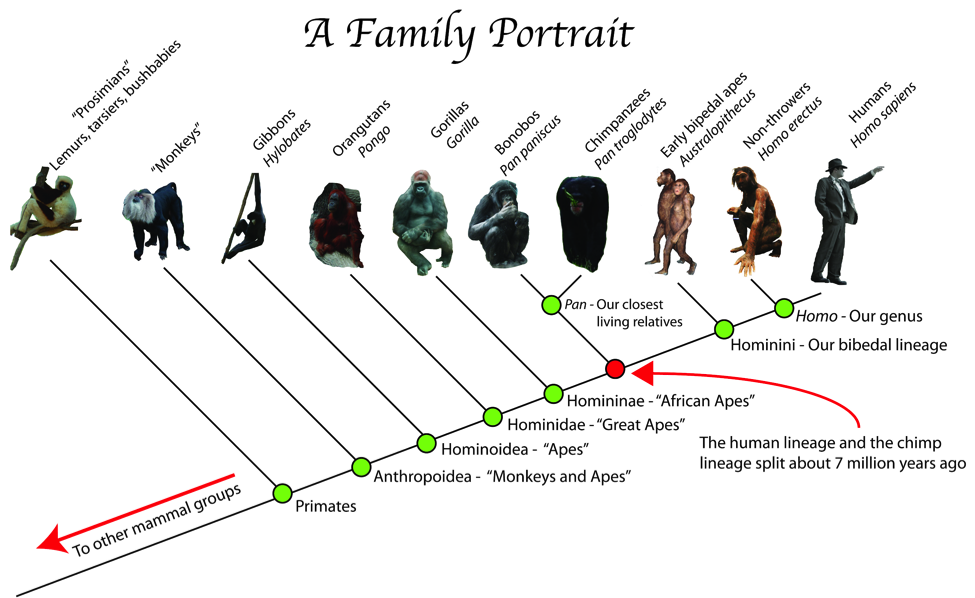 S03E08-gorilla-family-portrait.png