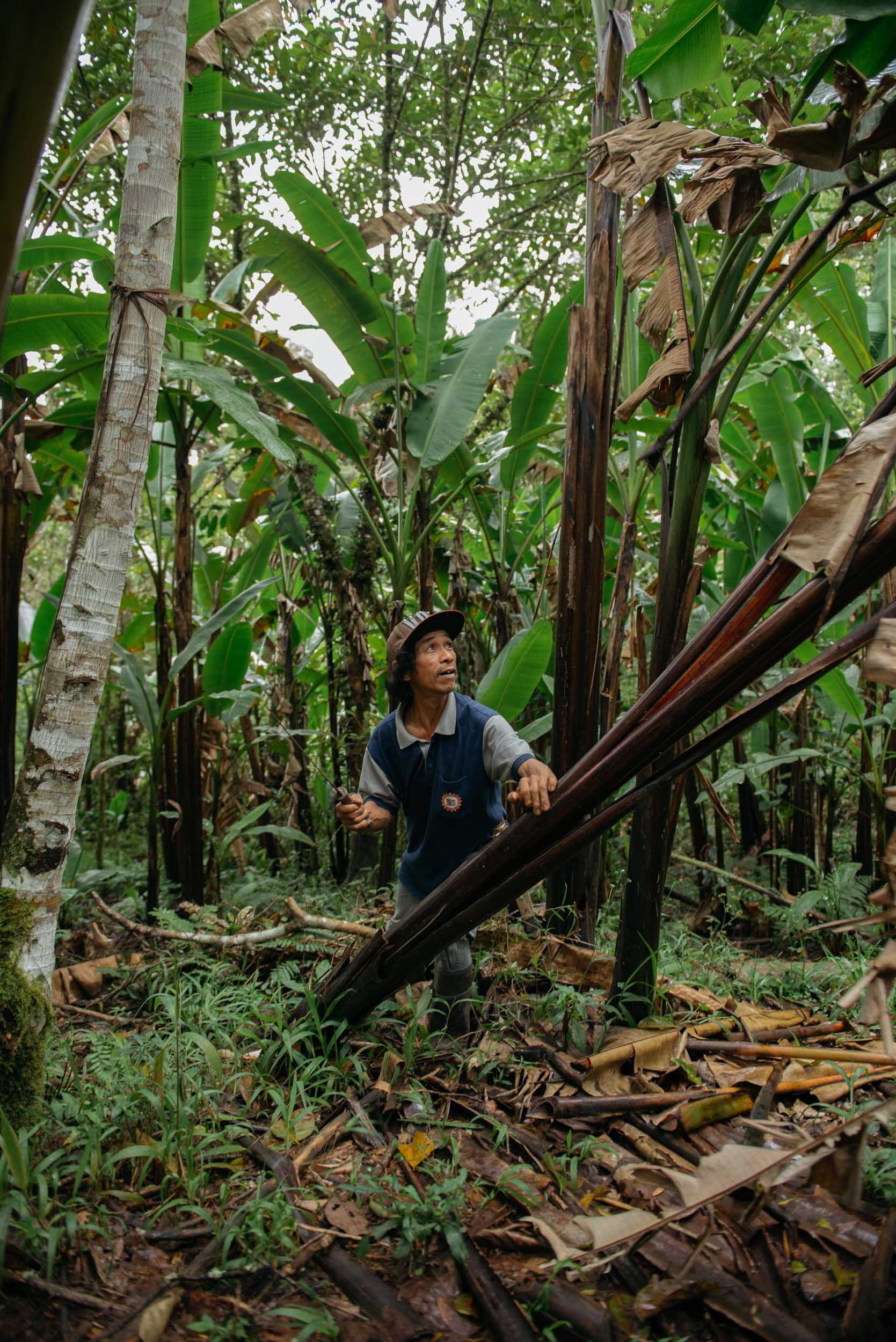 The process of Hinabol weaving starts with the abaca. A30-minute hike from the community, hectares of abaca trees were kept in best condition by the rainforest's excellent soil and the Higaonon's indigenous ways of sowing trees.