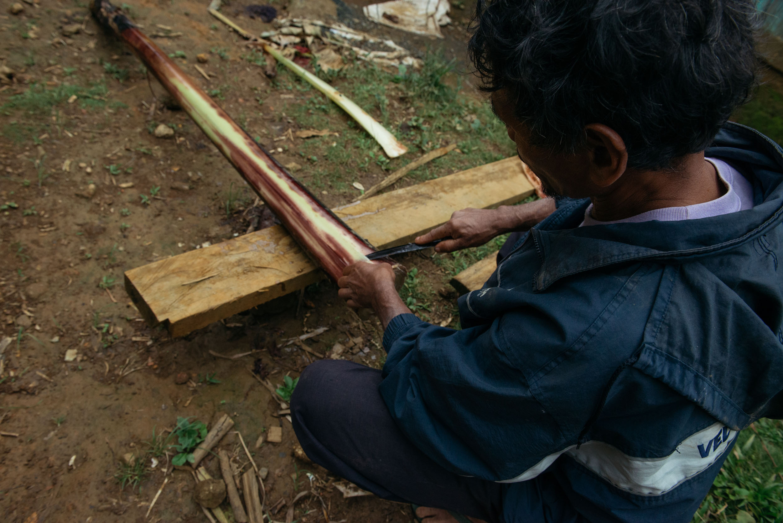 Once the men have harvested the trees, tuksi or the peeling of layers start. In traditional tuksi , the Higaonons use carabao bones as their knife. To this day, a small sharp knife is enough to peel hundreds of abaca. Primary layers are stripped to become the lanot or the fibers best for weaving.