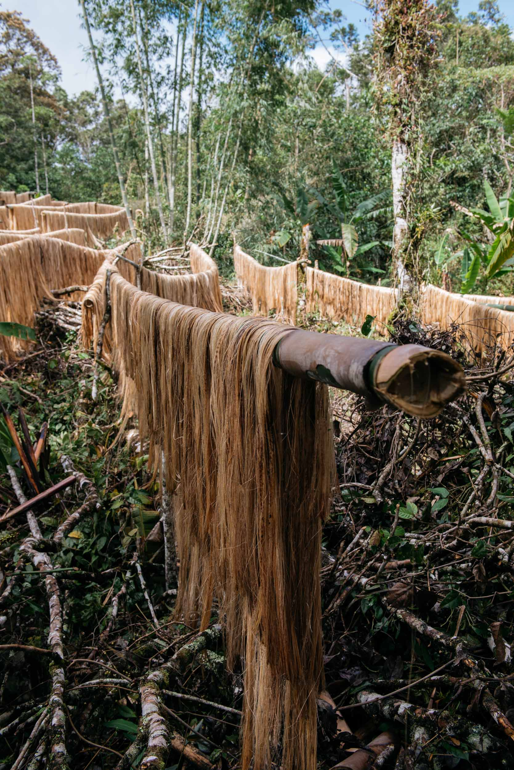 Once stripped, the farmers will then hang these fibers in wood panels placed in sun-directed areas within the forest. Sun-drying lasts for half a day up to two days, depending on the weather.