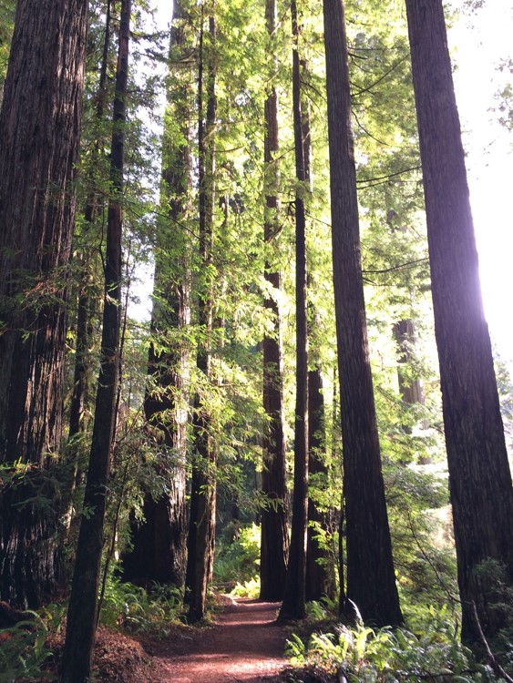 path trees.jpg