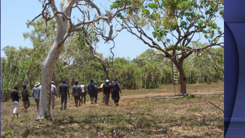 Tree Burial on Bardi country - DPLH