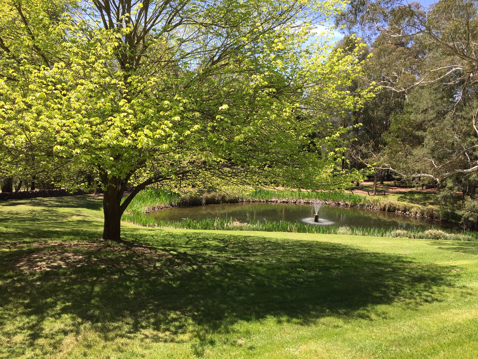Newly-established garden 'Greenbrier Park' at Mittagong