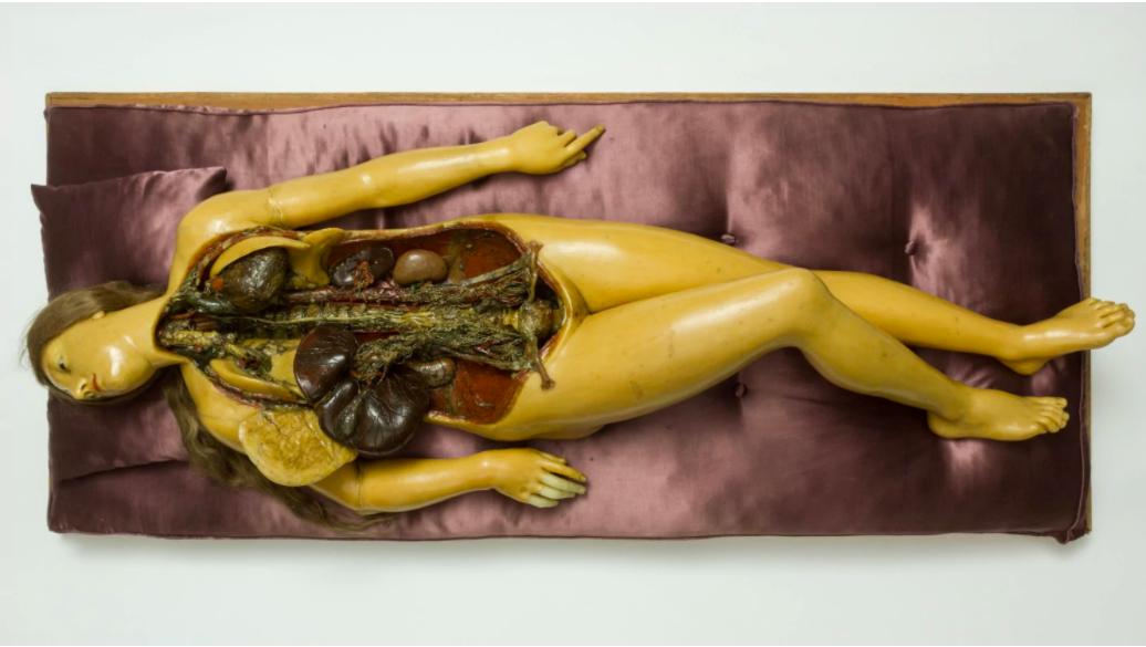 "Fontana Workshop (Florentine), ""Anatomical Venus,"" 1780-1785. (Hungarian National Museum)"