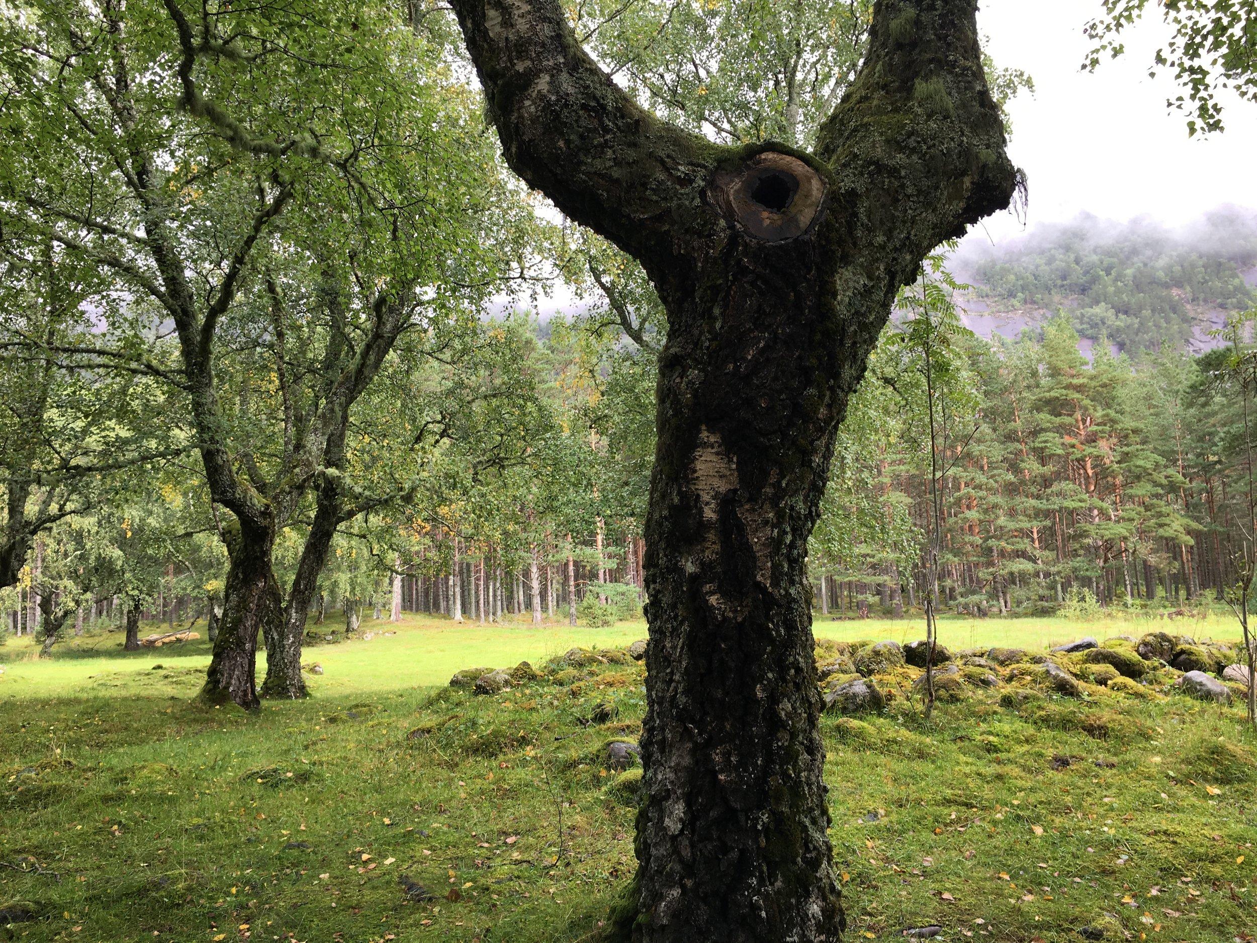 tree 21.jpg