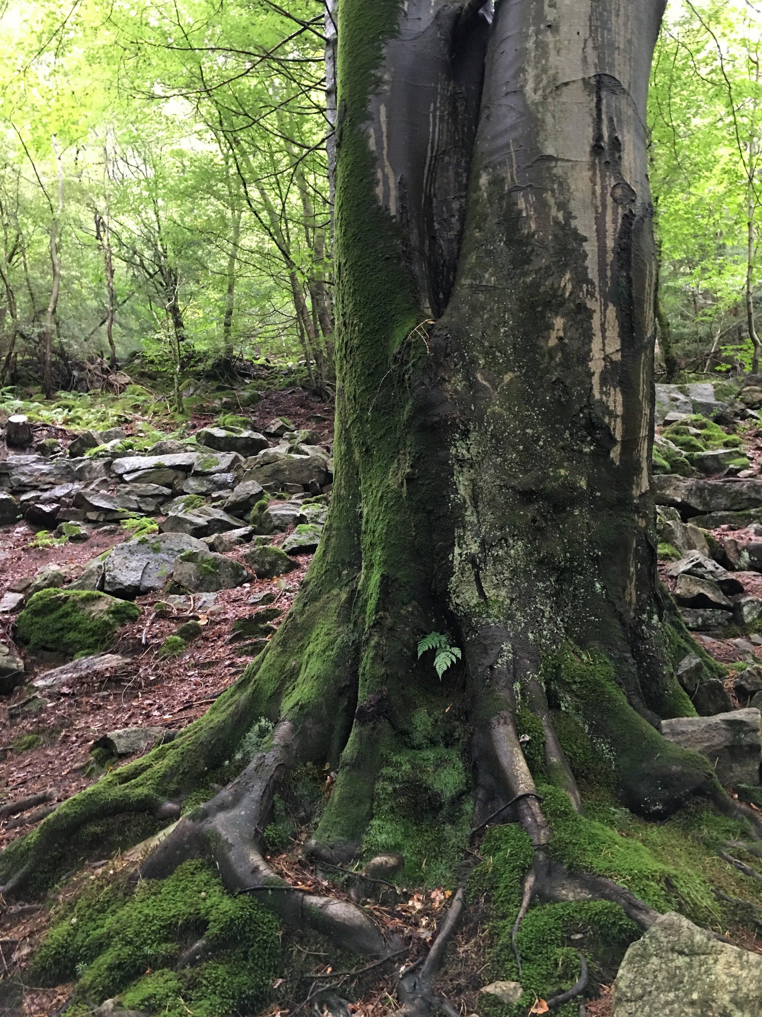 tree 14.jpg
