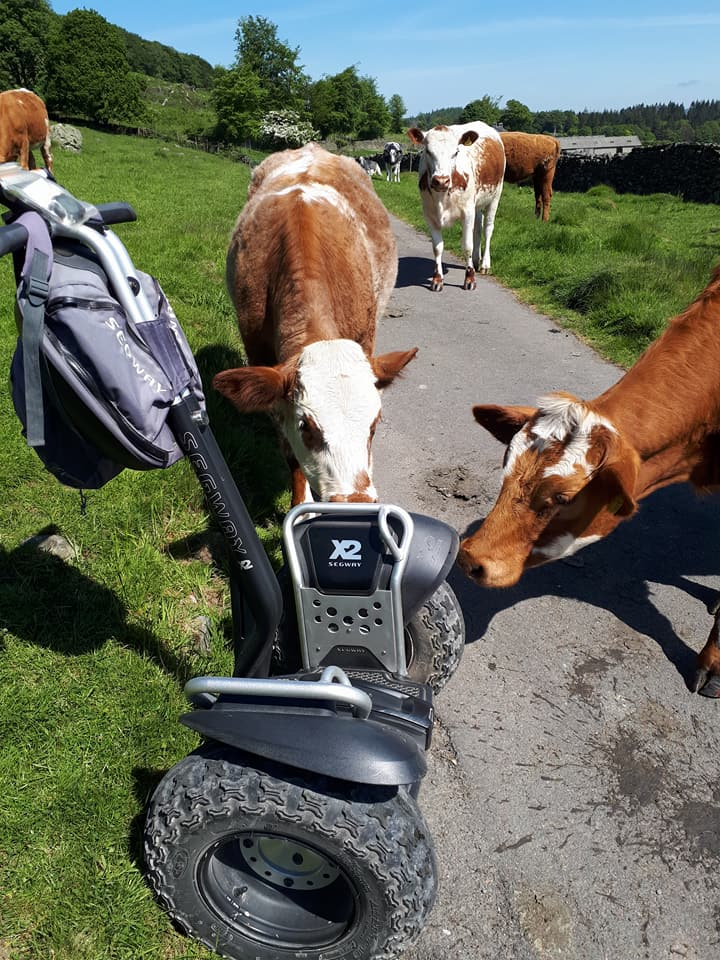 Segway and Cows.jpg