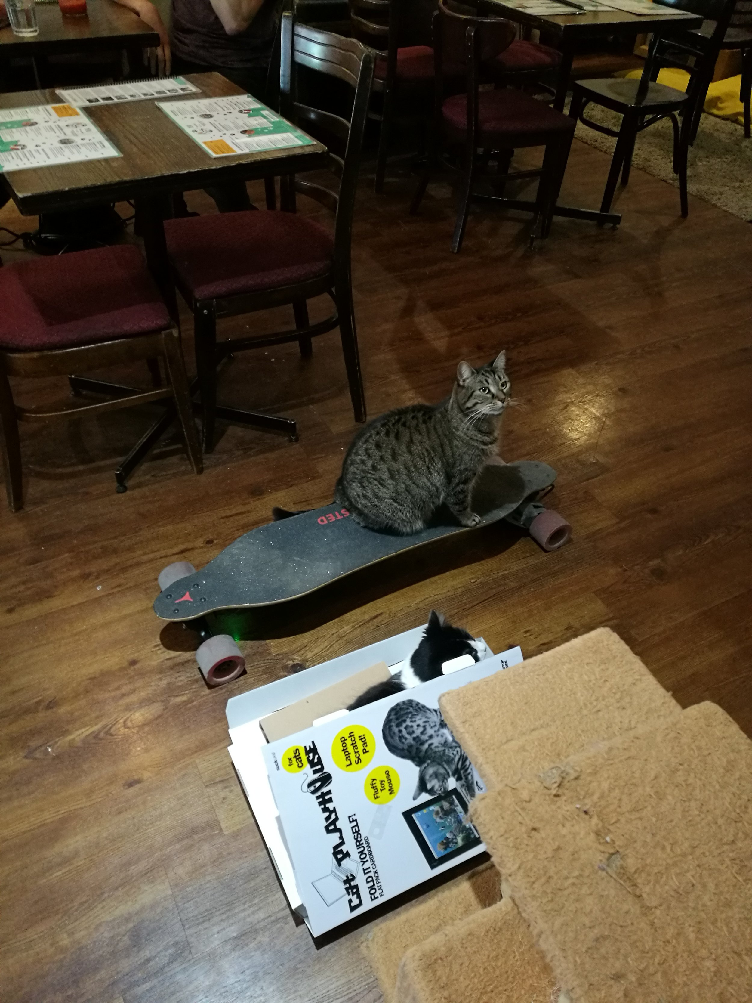 Cat cafe (9).jpg