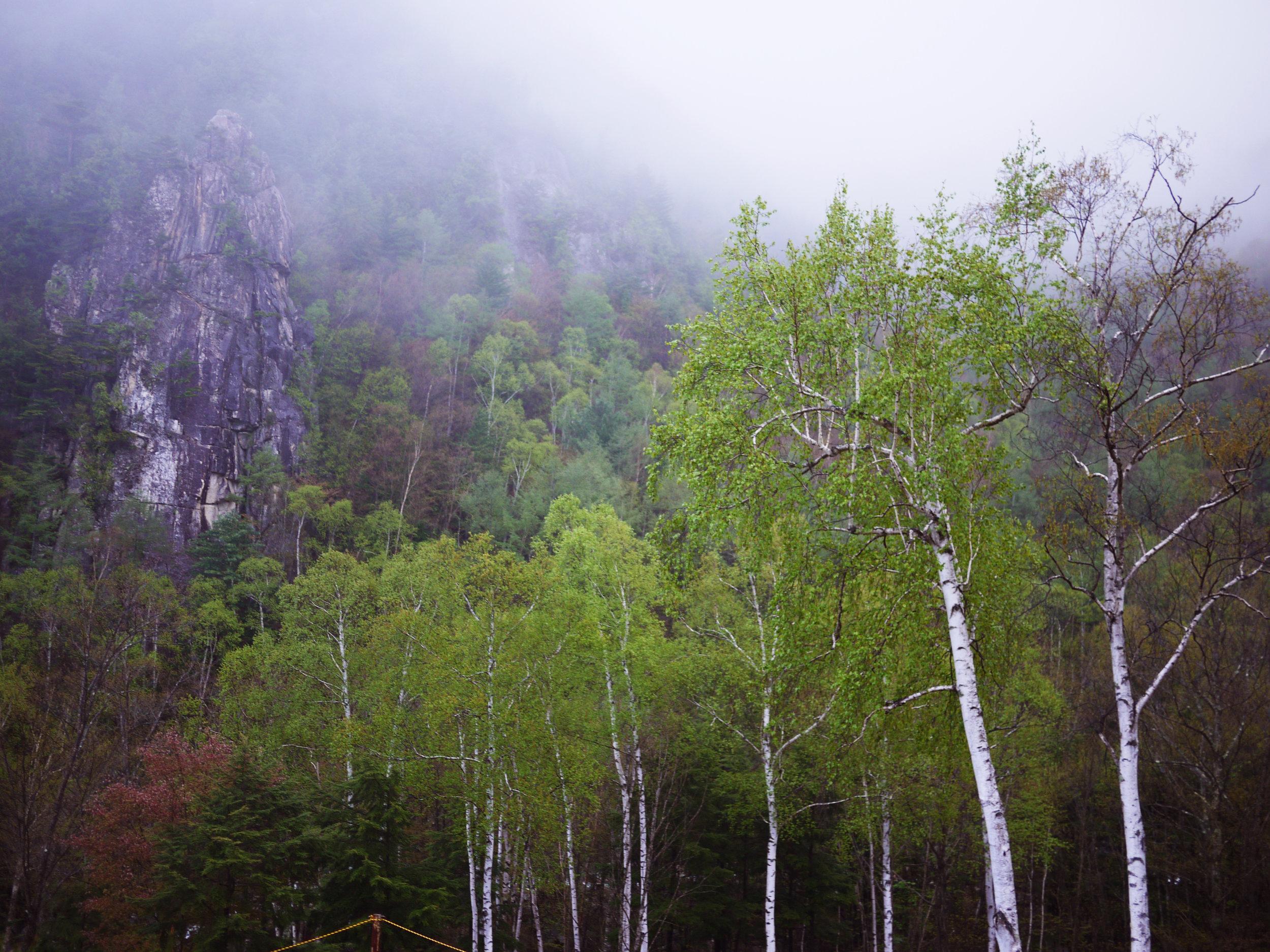 Full Order Wild Hunt Head Spa - フルオーダー ワイルドハントヘッドスパオーダーを承ってから、季節と自然のコンディションを吟味して山や自然の中に入り、ワイルドの薬草やハーブ、自然の恵みを採取し、その植物と自社で蒸留したオイルとハーブをーターを使用して行い、古来からのアーユルヴェーダのレシピを大学研究所による最新化学で復活させたオールナチュラルの頭皮用美容液を最新テクノロジーの低周波美容機器で頭皮に浸透させていきますご依頼されたクライアントにはワイルドハーブを採取している様子などの動画や様子の写真を全て公開いたします*2週間前からのご予約となります
