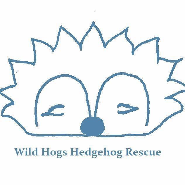 Wild Hogs Hedgehog Rescue