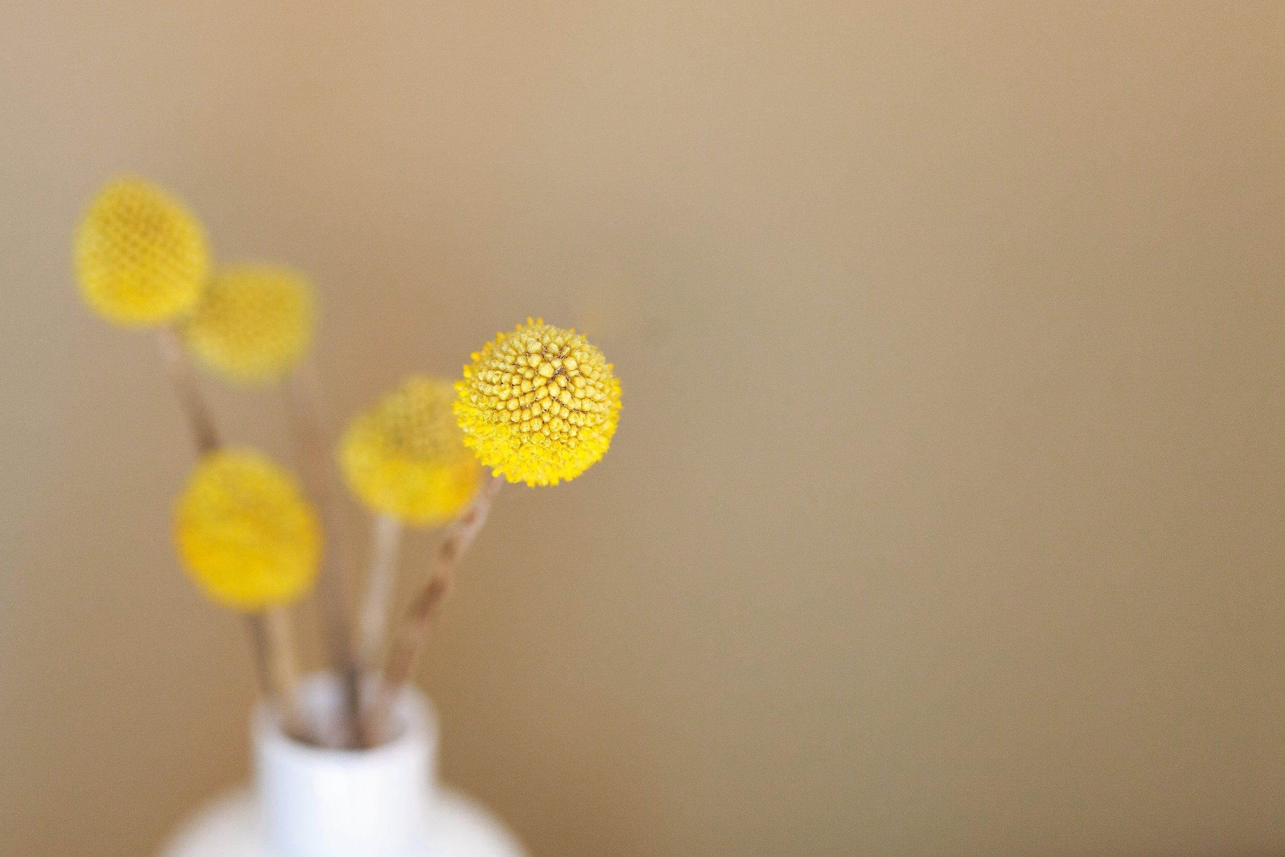 yellowflower-danielle-macinnes-72290-unsplash.jpg