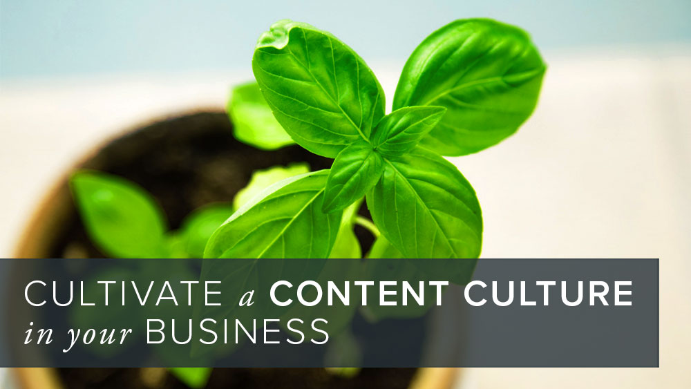 'cultivate+a+content+culture+in+your+business'+over+image+of+a+young+plant.jpg