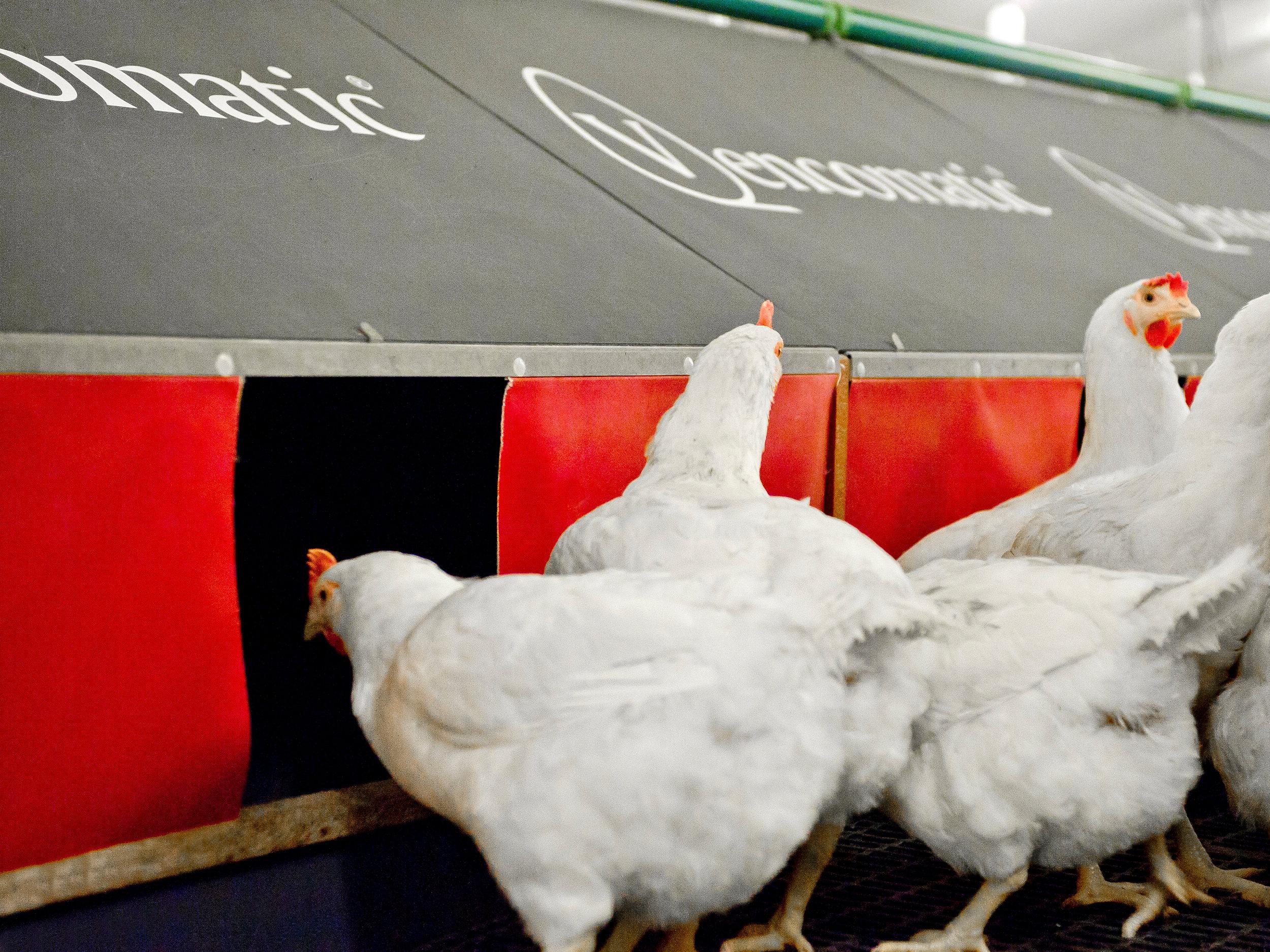 Agro - Voor wereldwijde spelers in de kippenstal inrichtingen leveren wij het plaatwerk voor de legnesten/broedhokken, de oploopplaten, eierbanddeksels enz.Indien gewenst coaten wij de panelen zodat ze gereinigd kunnen worden met een hoge drukspuit.