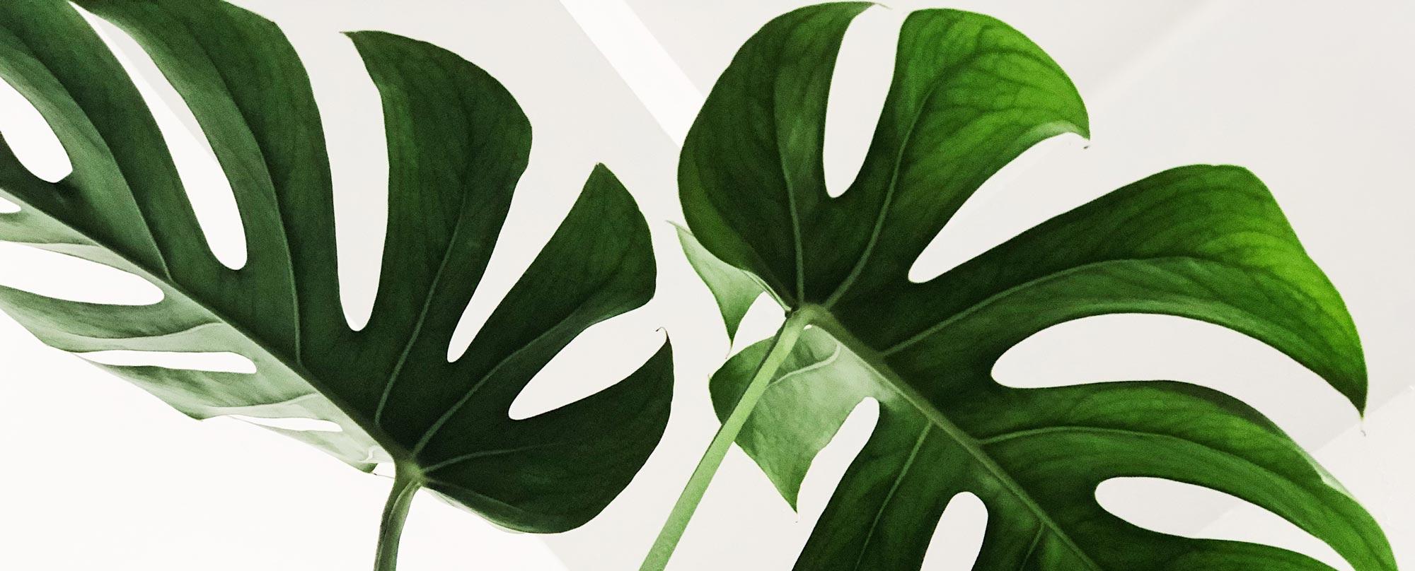 """Was ist Nachhaltigkeit? - Der Begriff """"Nachhaltigkeit"""" prägte bereits vor über 30 Jahren die World Commission on Environment and Development, kurz WCED. Diese betonte, dass man Bedürfnisse der heutigen Zeit verfolgen könne, solange zukünftige Generationen nicht gefährdet würden."""