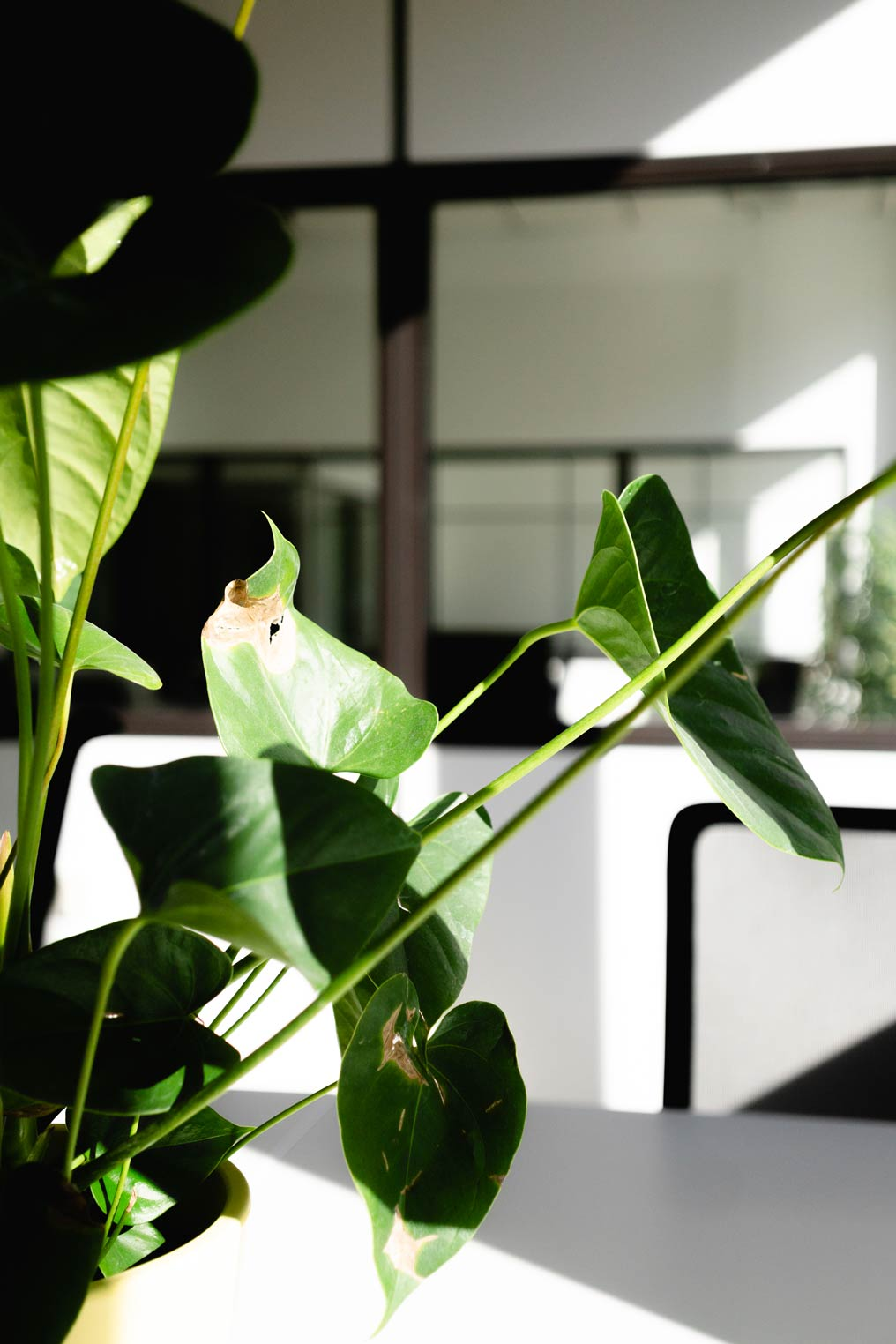 Pflanzen  im Büro wirken nicht nur beruhigend, sie reinigen auch die Luft