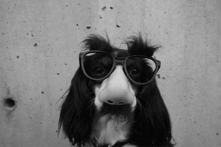 fraud-dog.jpg
