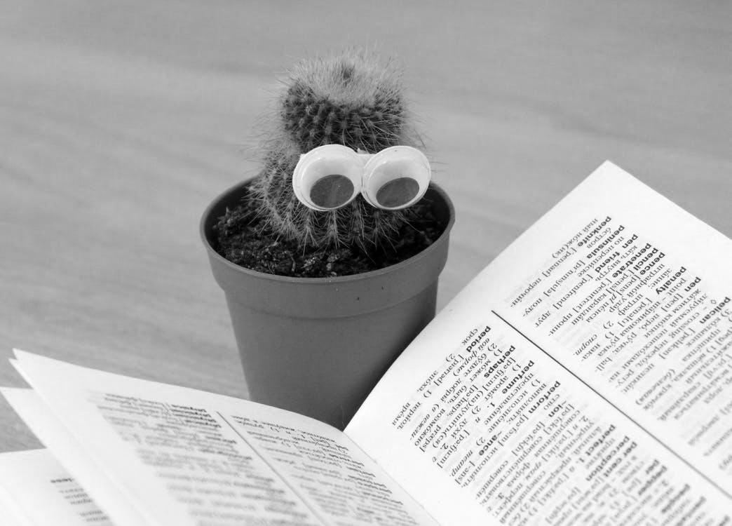 cactus-eyes-book-pot-B&W.png