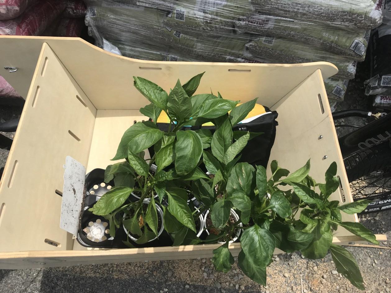 Garden center run to pick up a bunch of pepper plants