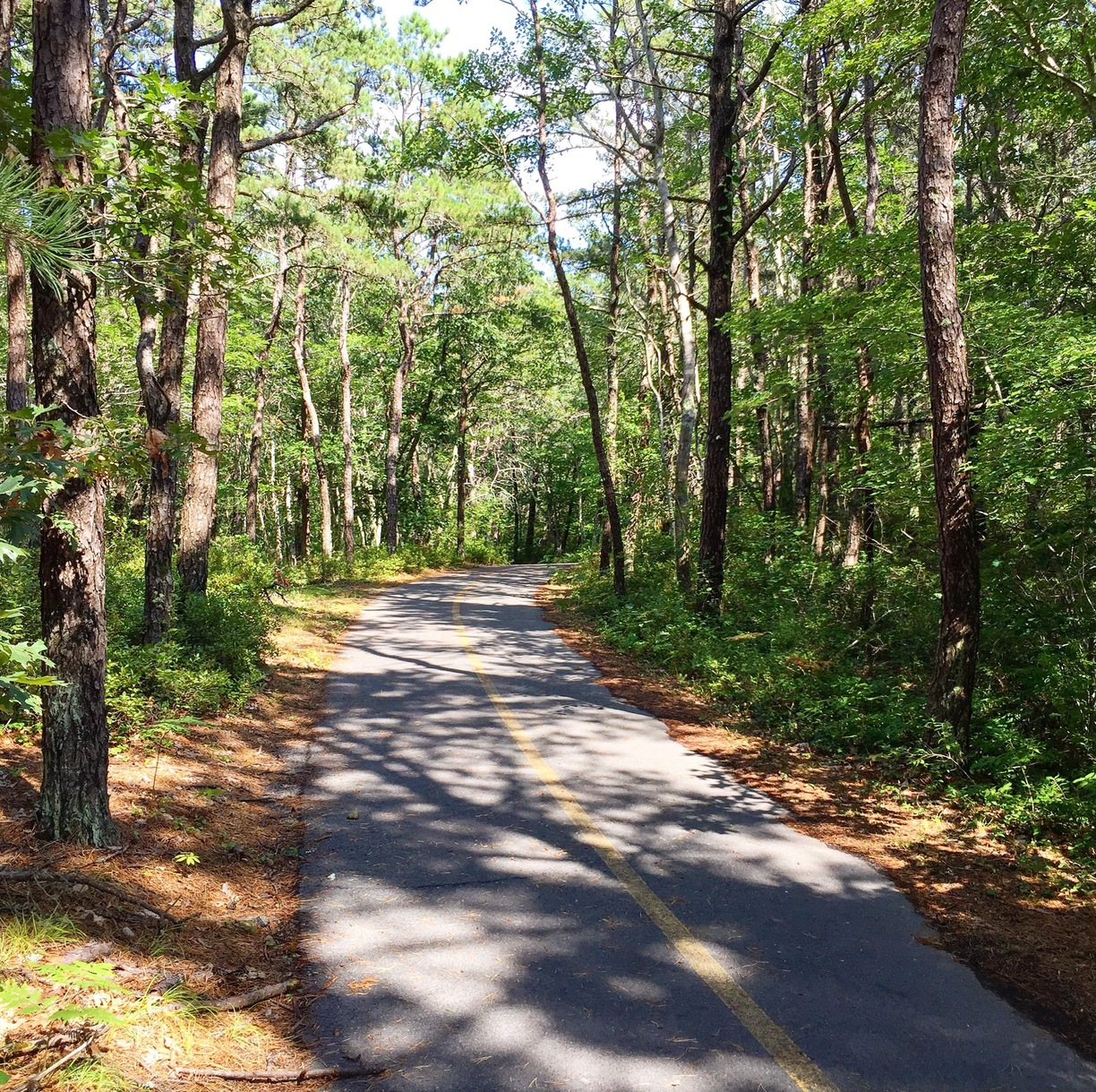 Beech Forest bike trail