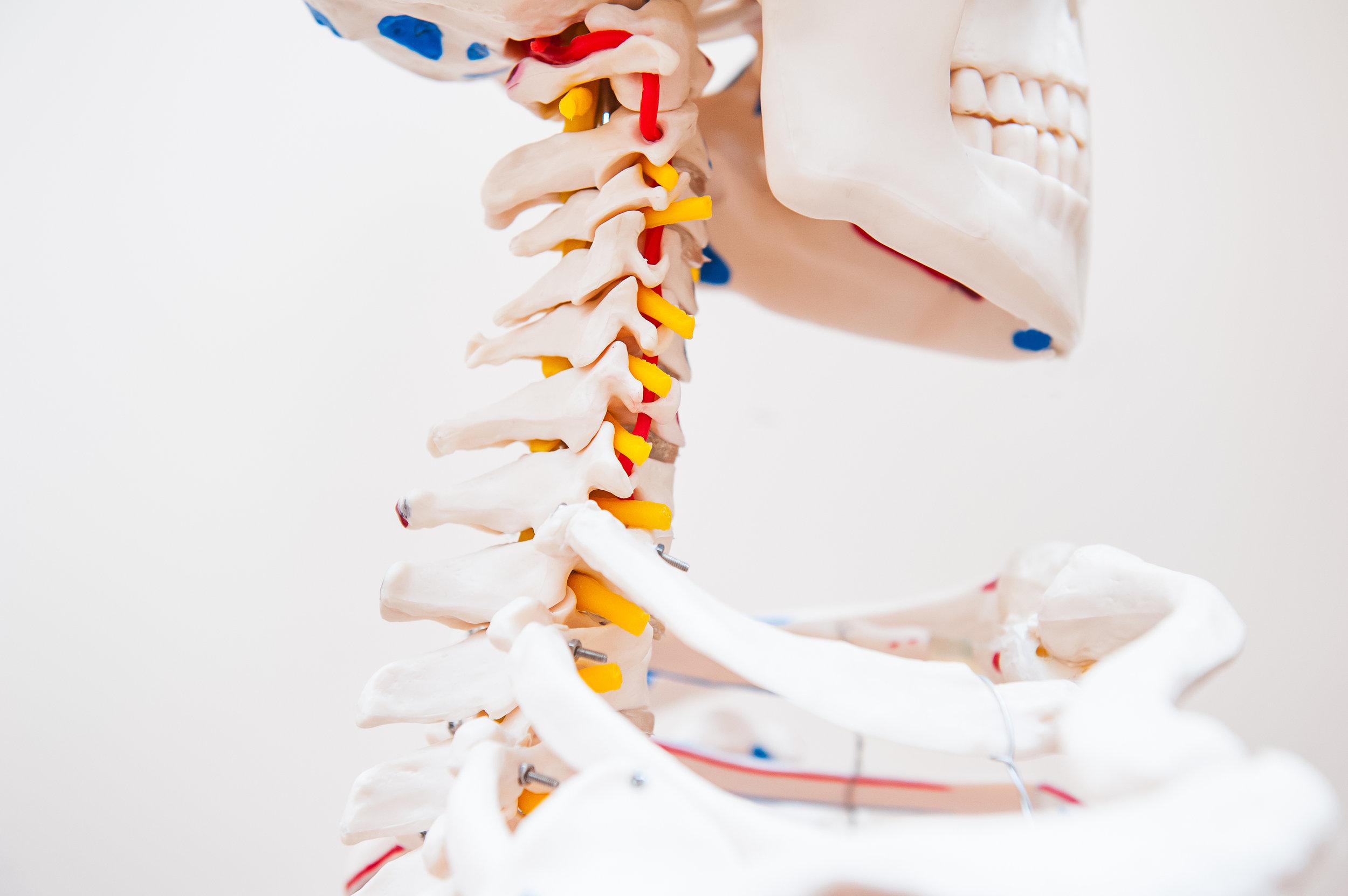 bigstock-Close-Up-Side-View-Human-Skele-166086356.jpg
