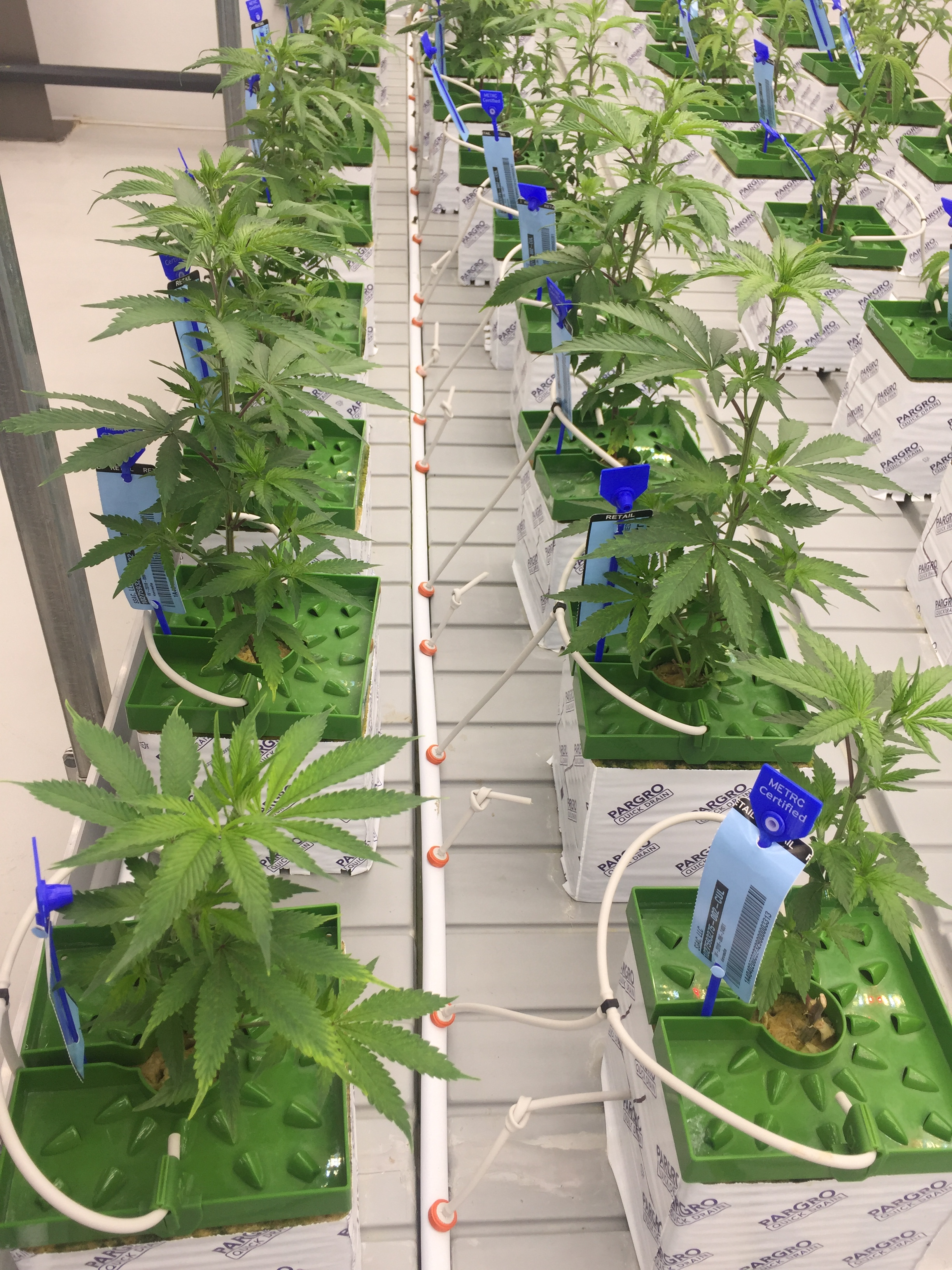 Our role is to give you the freedom and technology to develop and refine the growing process, so you can continue to grow the best plants possible.