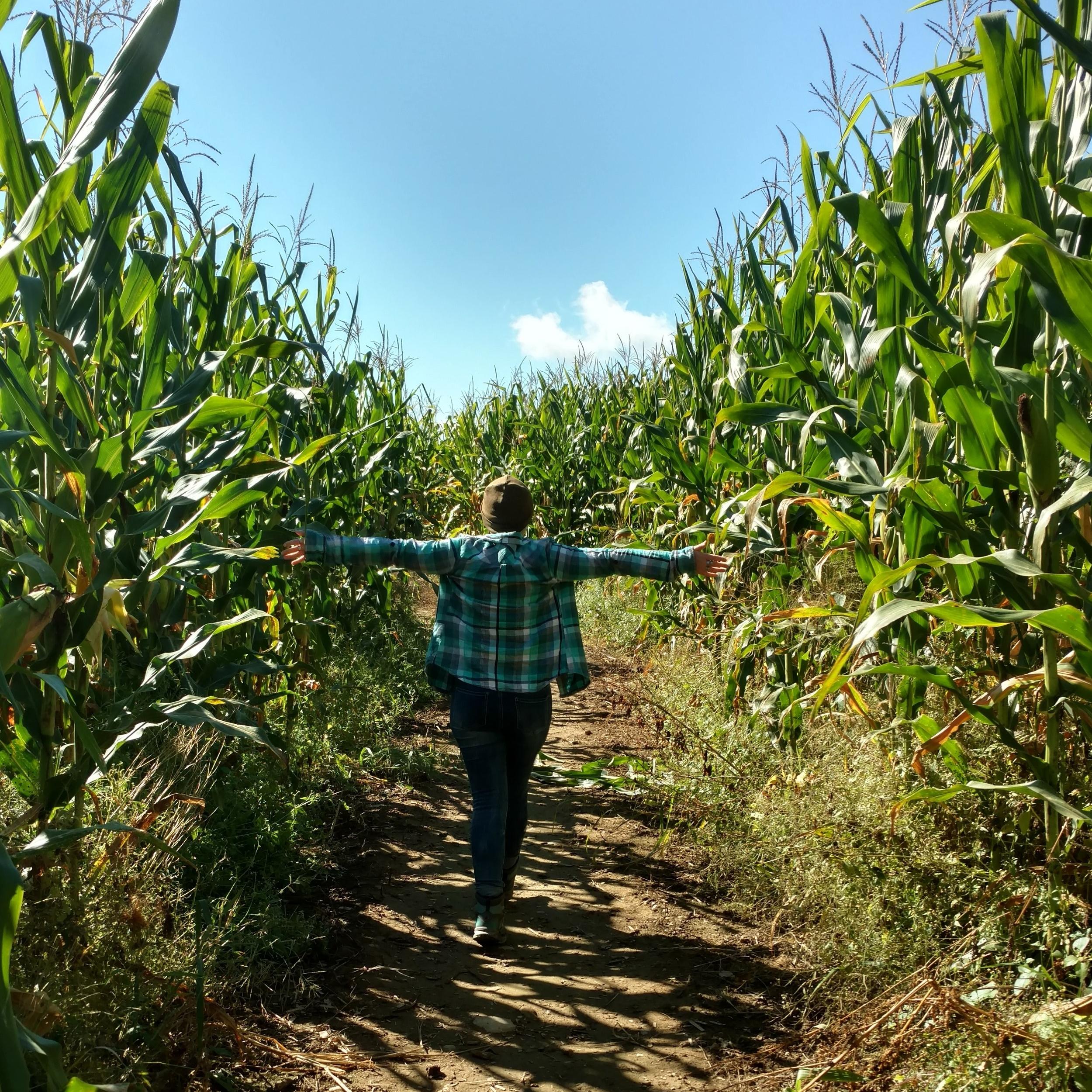 Corn Maze Vermont