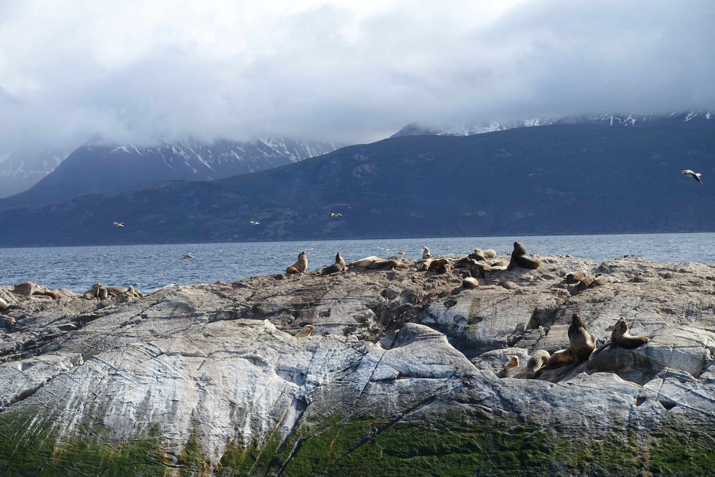 Things to do in Ushuaia Argentina sail the beagle channel