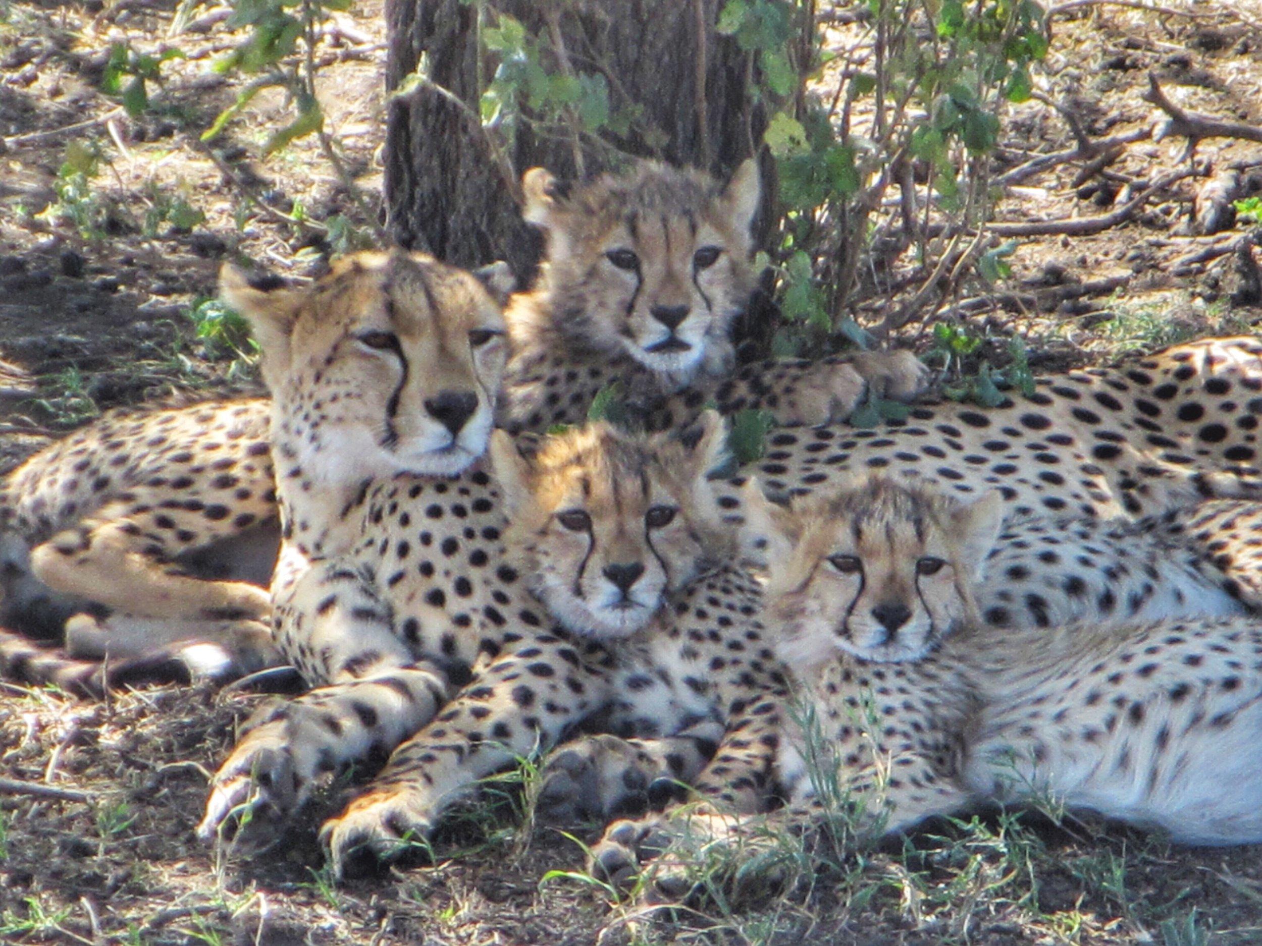 Mistakes to avoid on an African Safari