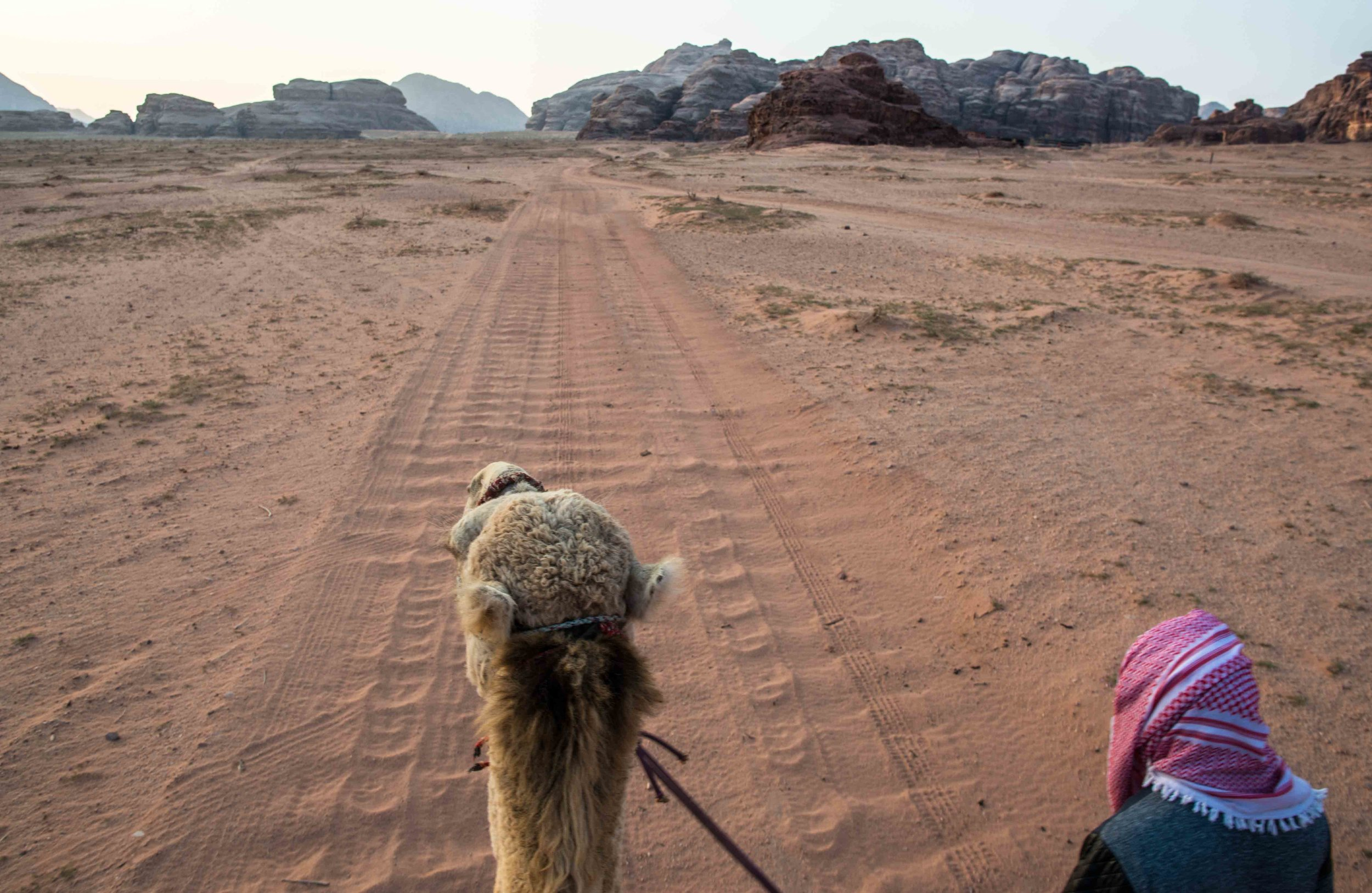 Camel Trekking in Wadi Rum Jordan