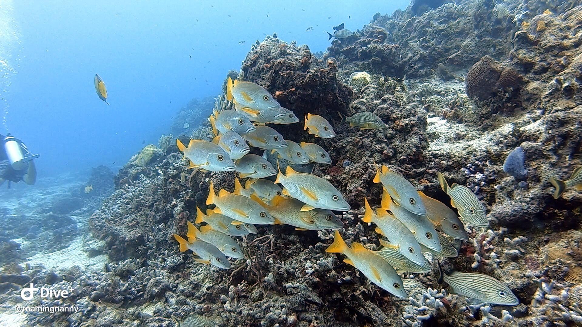 Scuba Diving FIsh