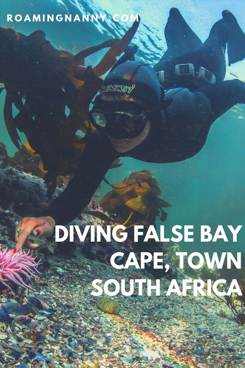 The waters of False Bay in Cape Town, South Africa, while chilly are filled with plenty of the ocean's most amazing species. If you're a diver False Bay is a must visit destination! #diving #freediving #scubadiving #southafrica #capetown #falsebay