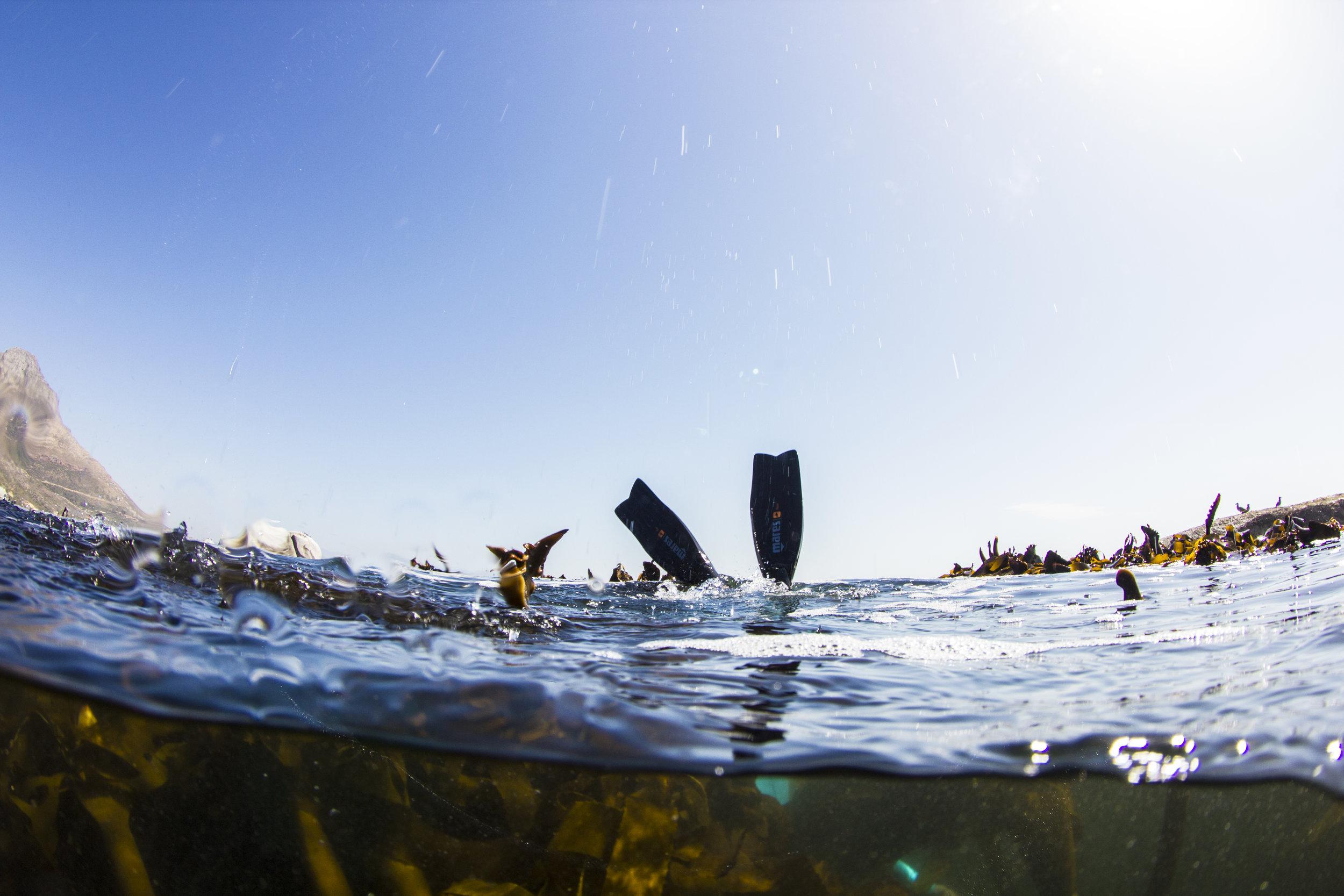 False Bay Kelp Forest