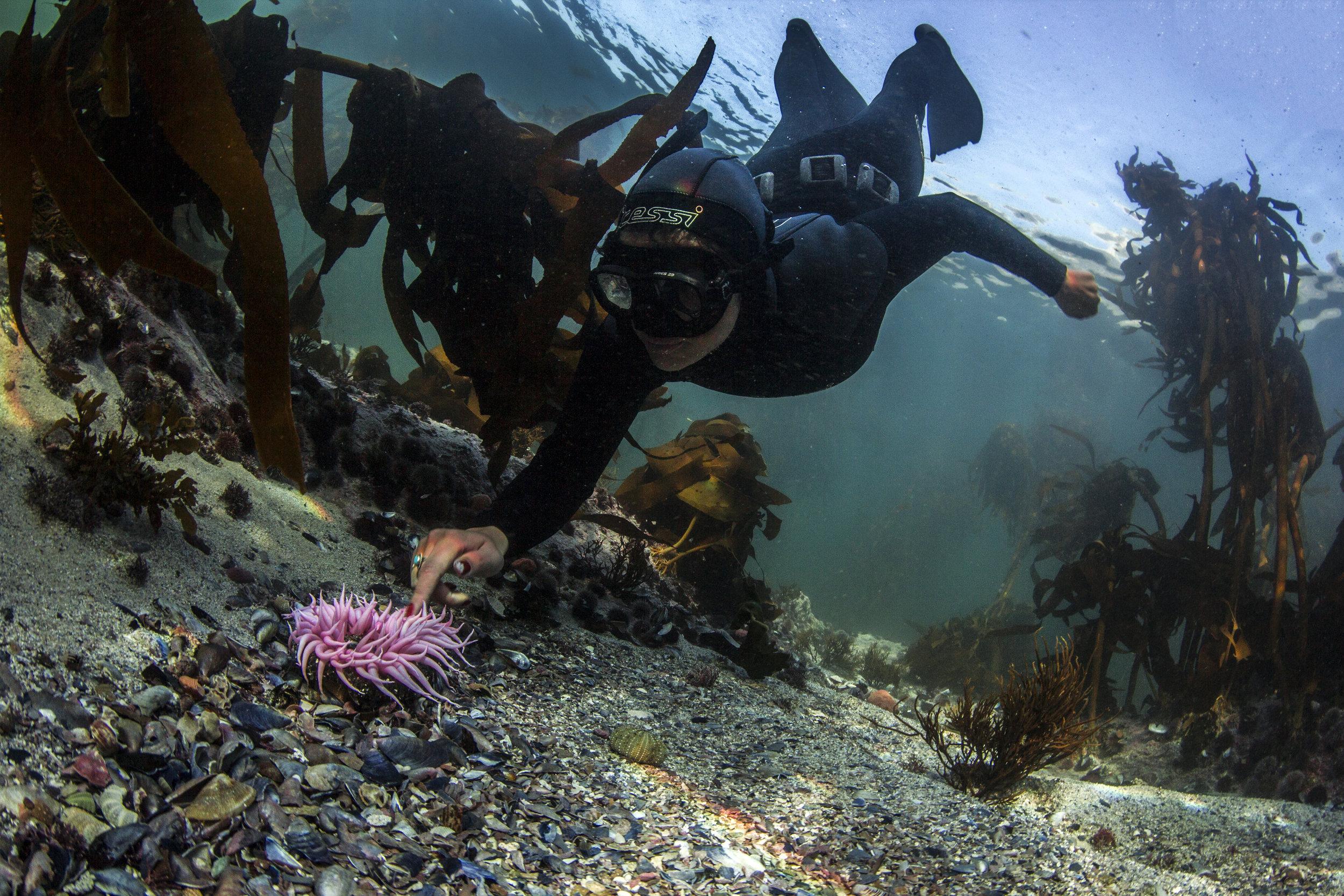 top dive spots near cape town