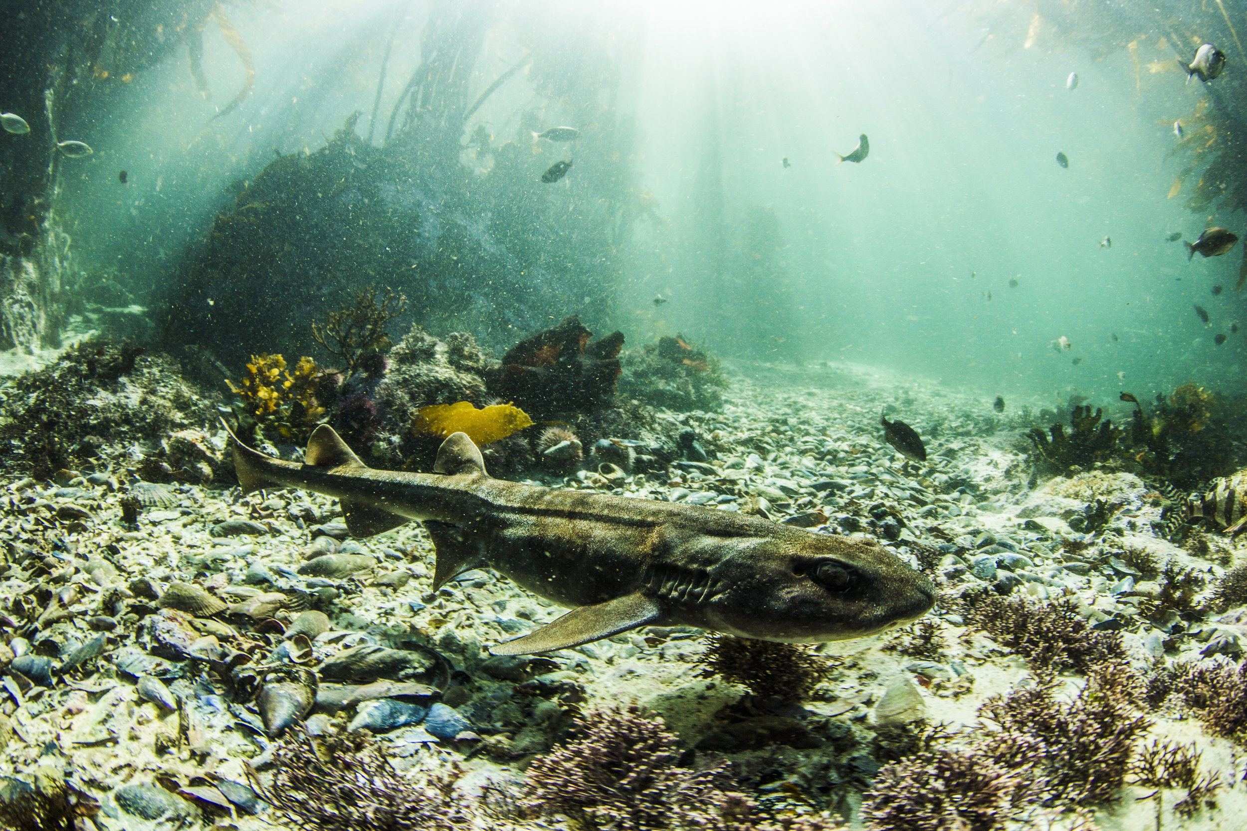 Best places to dive in South Africa - False Bay